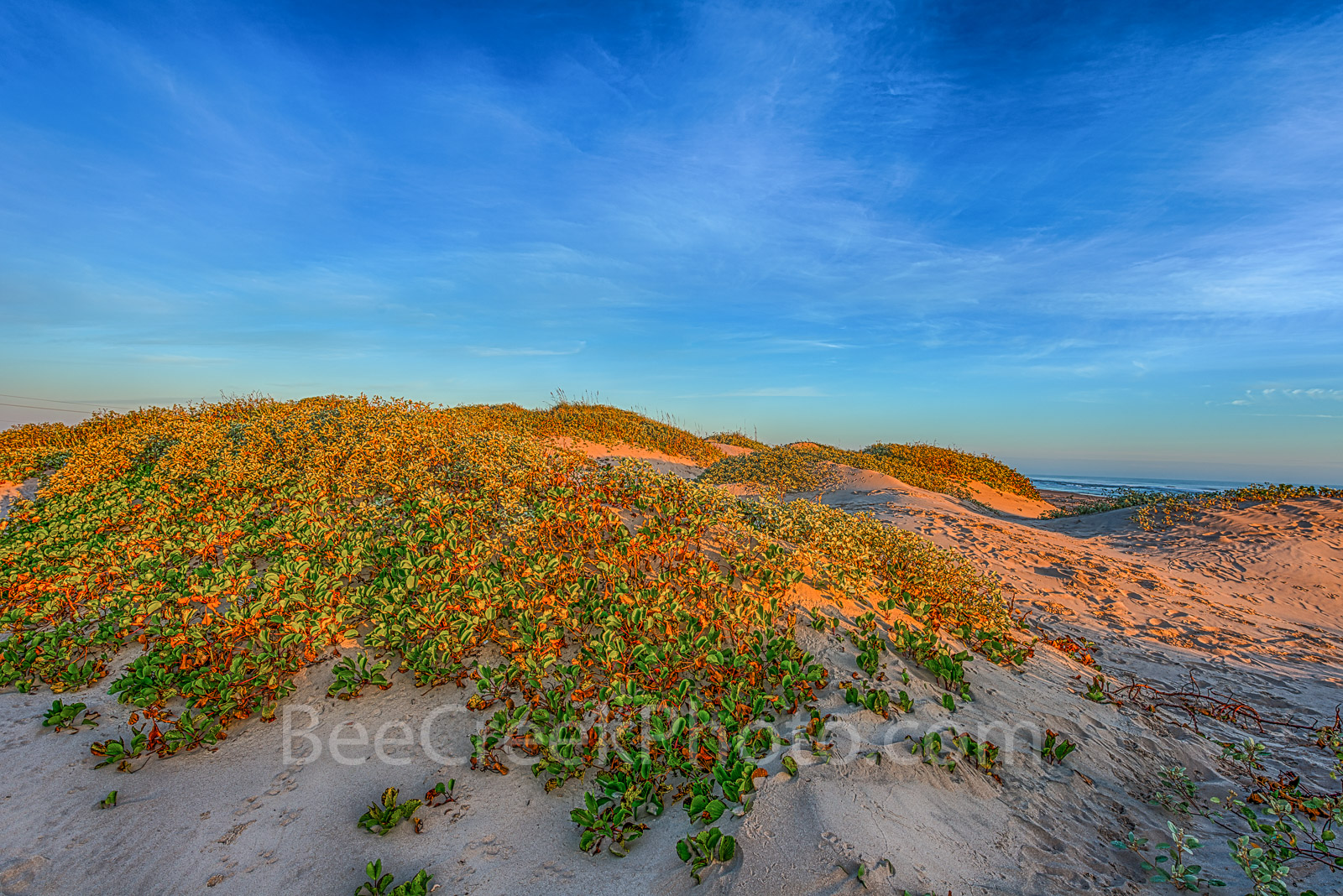 Golden Glow Over Dunes - Texas Coast Landscape - Early morning light over the beach dunes right at sunrise at Padre Island...