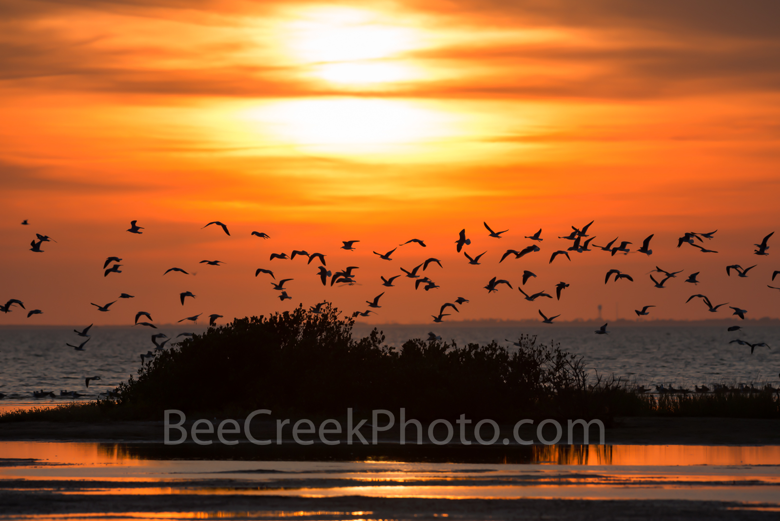 Golden Sky and Sea Birds Siloutte- Sea birds in siloutte at sunset at South Padre Island on the bay as the flock...