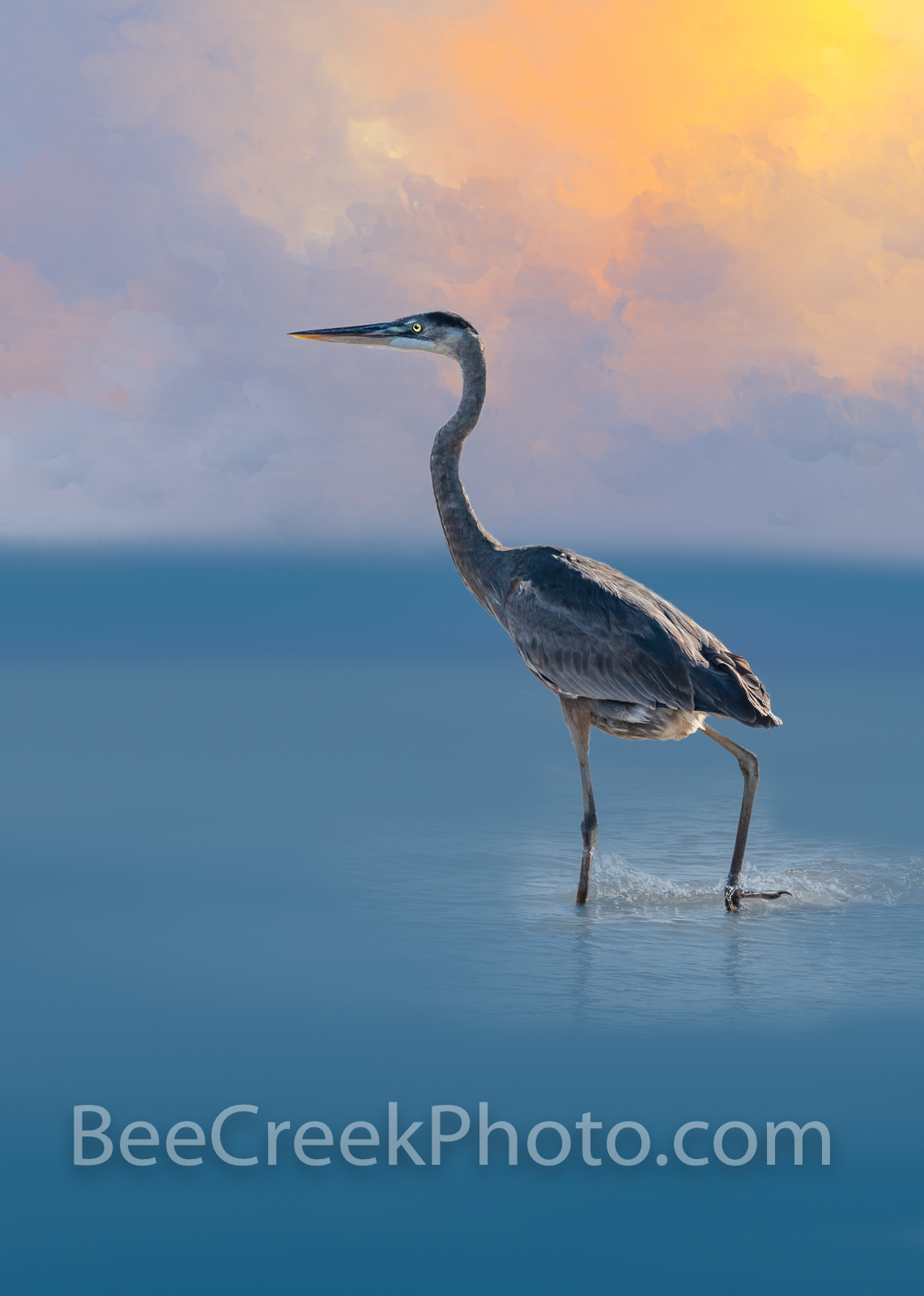 Great Blue Heron - This is a photo-painting of the great blue heron wading out as he is searching for food along the shallows...