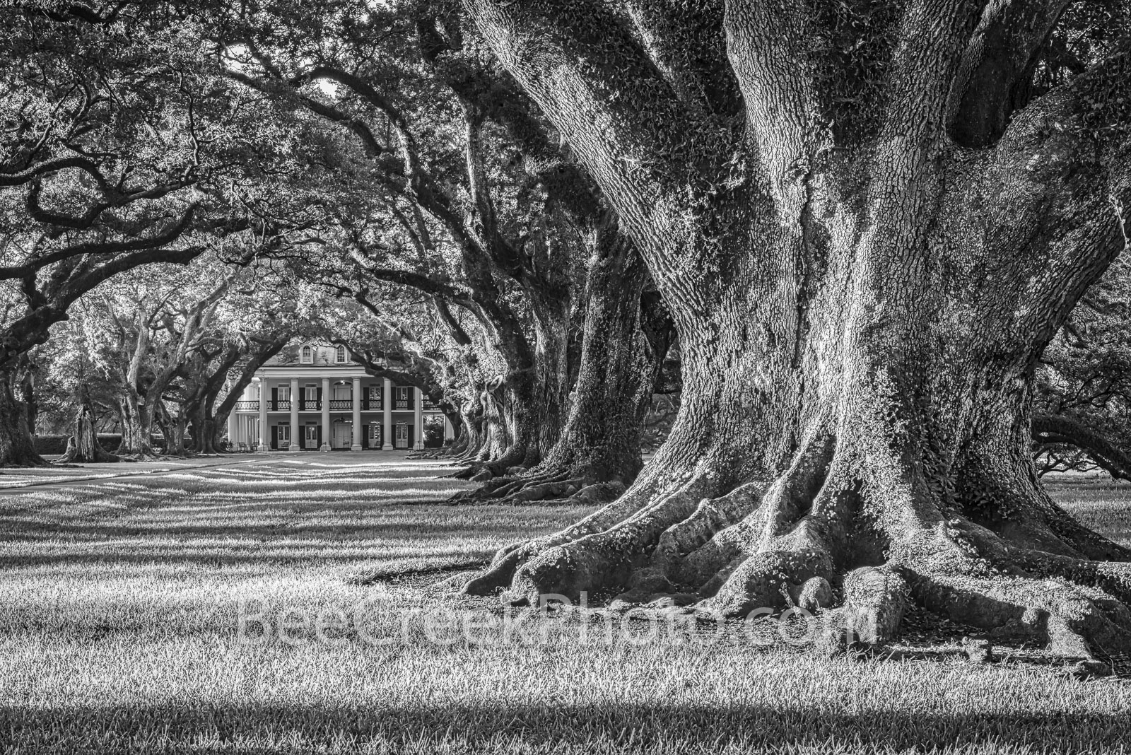 oak alley plantation, oak alley, b w, black and white, louisiana, plantation, oak valley, seven oaks, mansion, oak trees, roots, branches, sunrise, sugar cane, slaves, mississippi, river, southern, us, photo