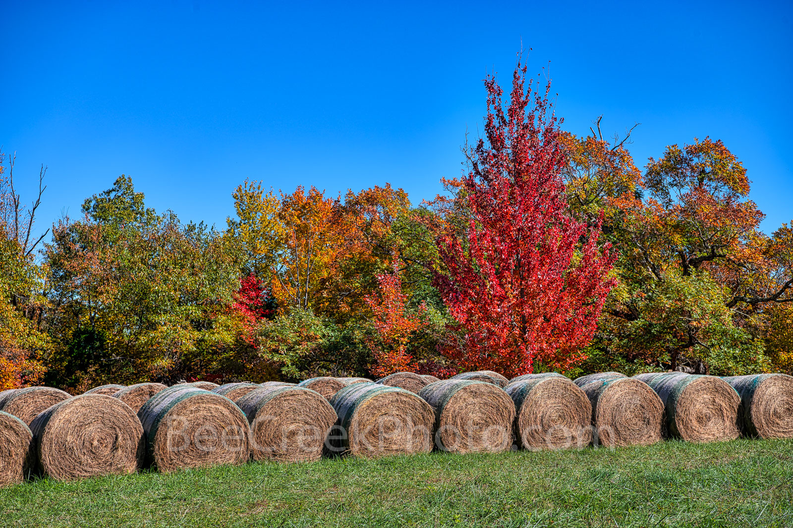 hay bales, autumn, fall, colors, ozark, trees, grass, nature, reds, oranges, greens, season, rural, horizontal, arkansas,maple, october,, photo