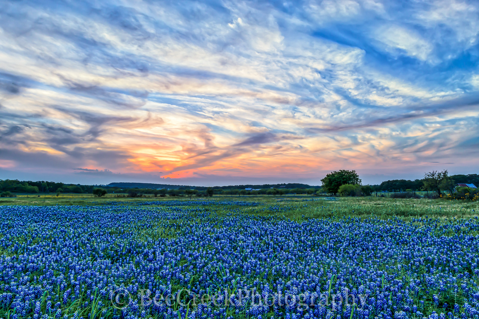 bluebonnets, hill country, texas, sunset, glow, clouds, sky, colorful, awesome, blue coloful, landscape, rural landscape, old farm house, PEC office, , photo