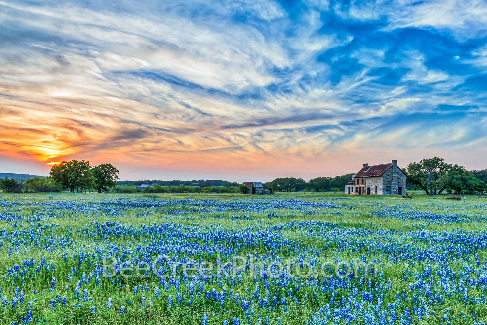 Bluebonnets, blue bonnets, field of bluebonnets, sunset, farmhouse, wildflowers, sky, clouds, hill country, flowers,, photo