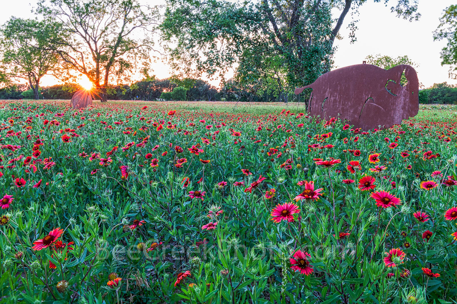 hill Country wildflowers sunset, hill coutry, sunset, metal buffalo, sun rays, firewheel, indian blanket, wildflowers, spring, bison, texas, landscape,, photo