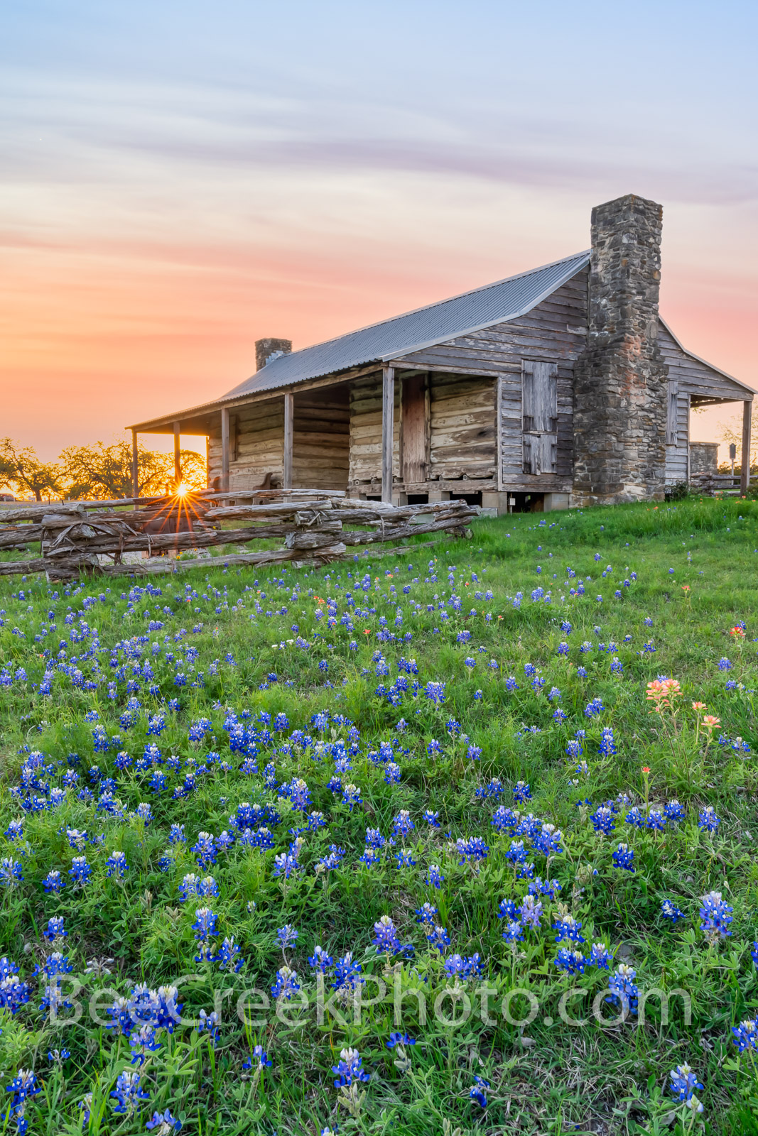 John P. Cole, Cole settlement, cabin, log cabin, bluebonnets, indian paintbrush, wildflowers, texas bluebonnets, texas wildflowers, old baylor park, vertical, baylor university, historic, rural, Independence texas, Sam Houston, Chief Justice of Washington County, founders, historical, preservation,