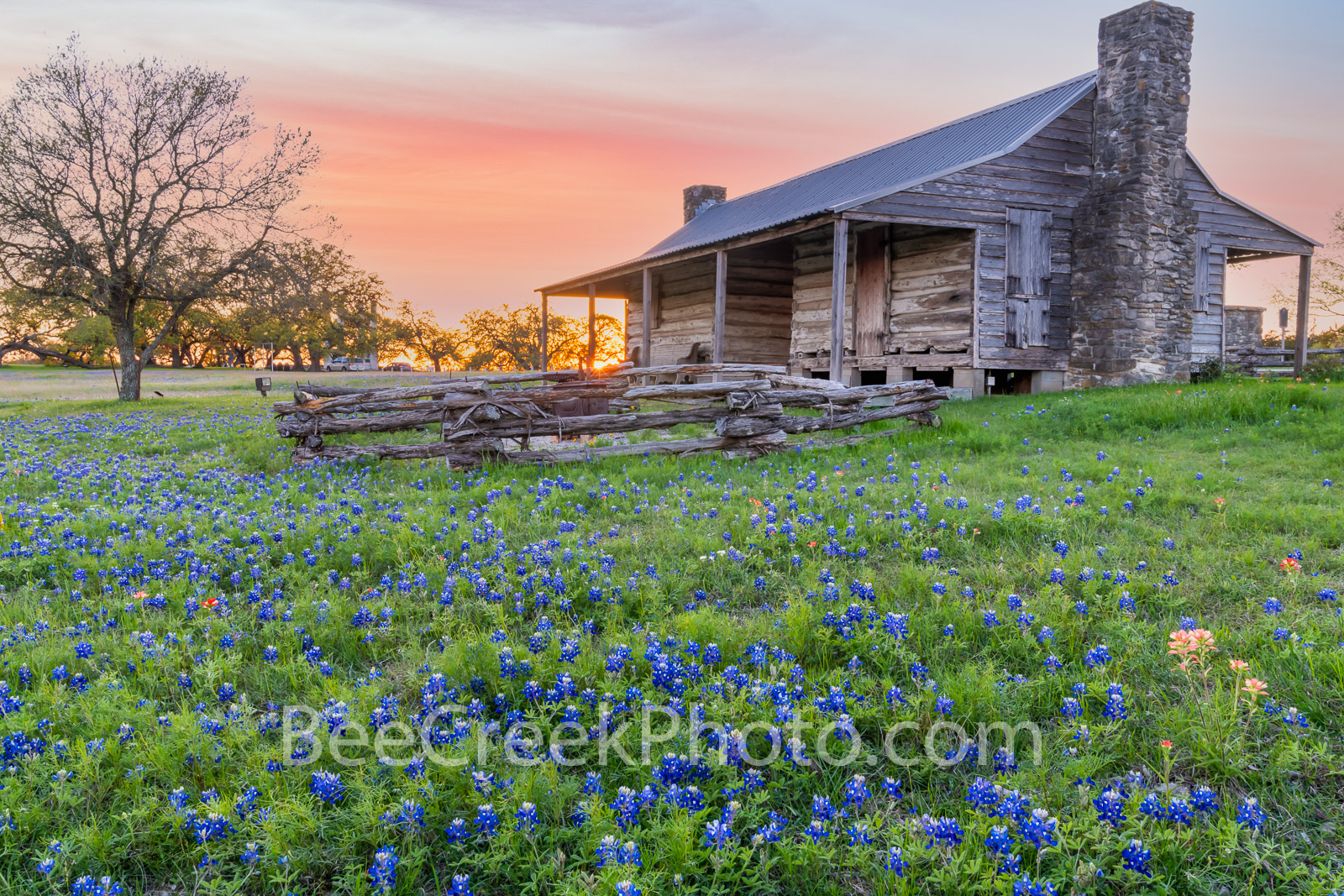 John P. Cole Cabin Wildflowers at Sunset - We took the John P. Cole Cabin with bluebonnets and Indian Paintbrush wildflowers...