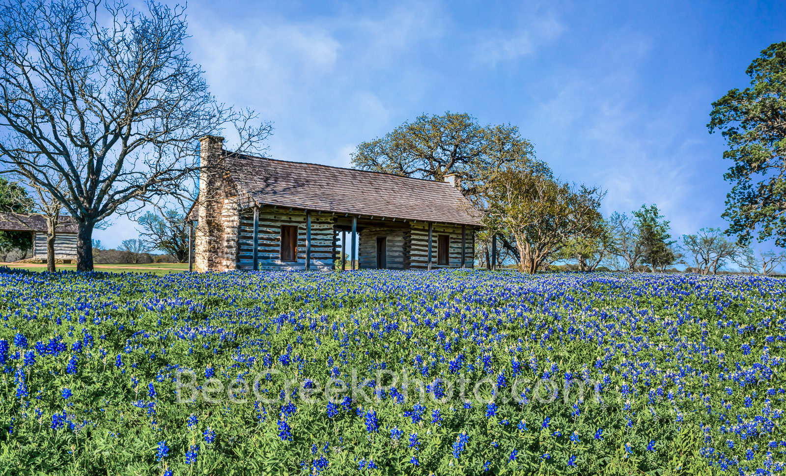 bluebonnets,, blue bonnets, log cabin, historic, wildflowers, field, landscapes, images of texas, texas wildflowers, spring flowers, spring, springtime, flora, plants, natural,, photo