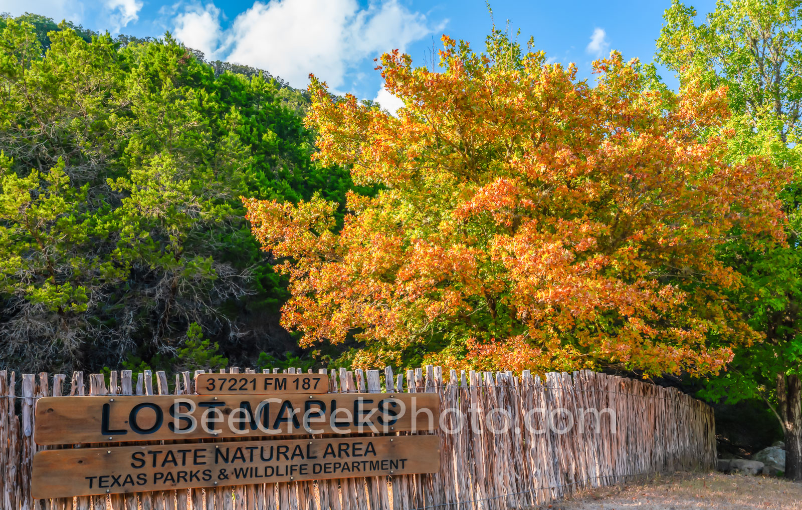 Lost Maples Park, Lost Maples, nature area, nature, natural, State Natural Area, Texas parks and wildlife department, autumn, fall, fall scenery, fall colors, texas hill country, hill country,, photo
