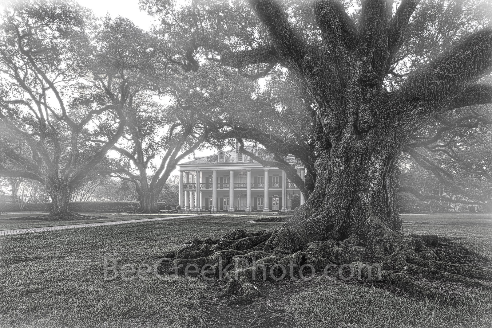 Oak Alley Plantation, black and white, bw,  misty, live oak trees, plantation oaks, slavery, deep south, southern, oak valley, seven oaks, mansion, big house, movies, Mississipp river, Vacherie, St Ja, photo