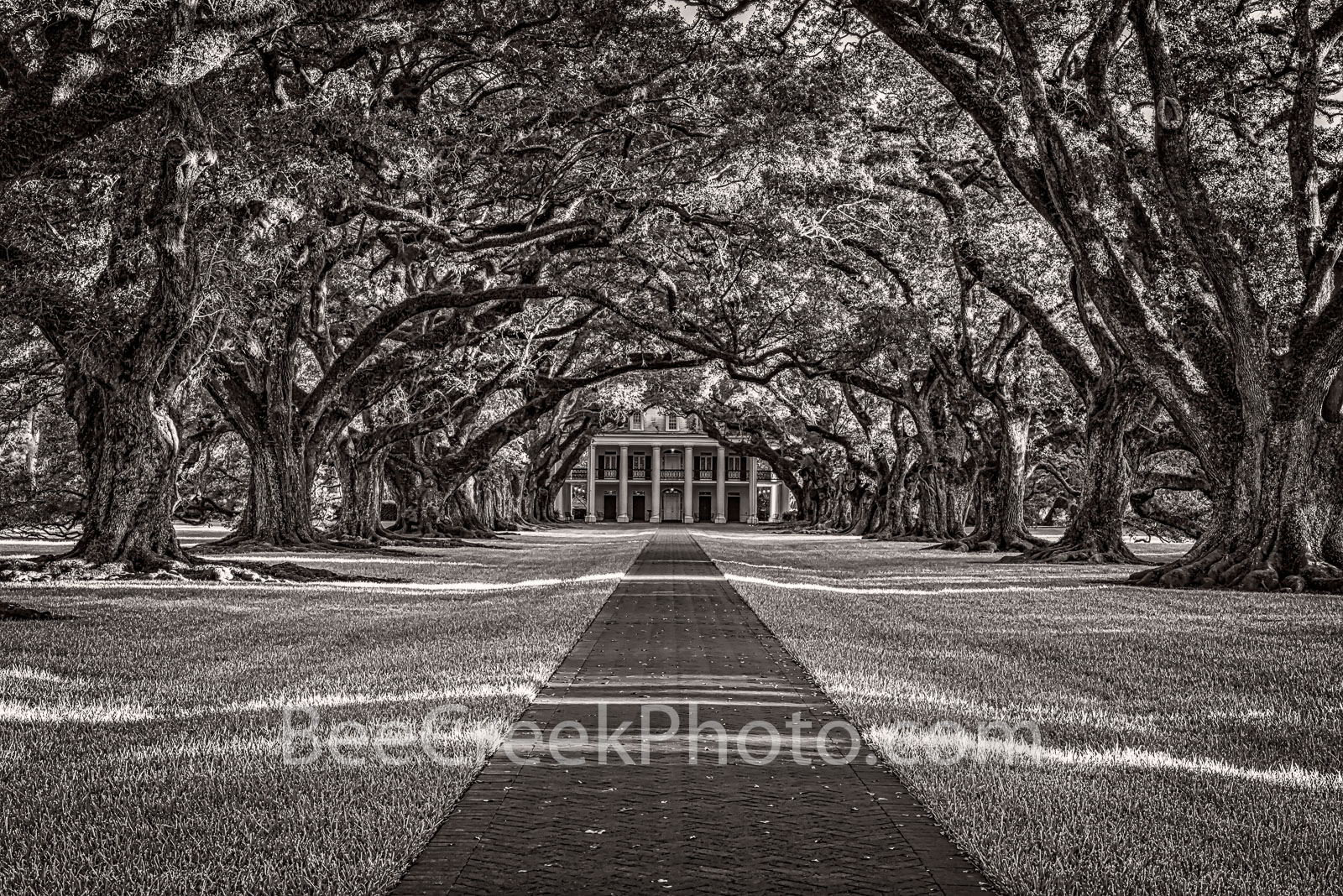 Lousiana, Oak Alley Plantation, black and white, BW, big house, branches, mansion, oak trees, plantation, roots, sidewalk, slaves, sugar cane, canopied path, seven oaks, oak valley, National Historic , photo