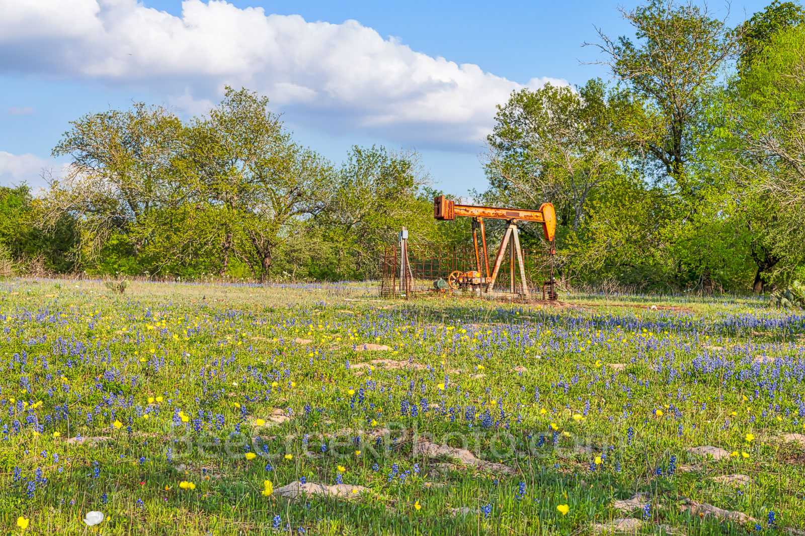 bluebonnets, butter cup, yellow, oil derrick, oil well pumper, wildflowers, San Antonio, pumpers, industrial, Texas wildflowers, images of texas, texas industrial, oil rig,, photo