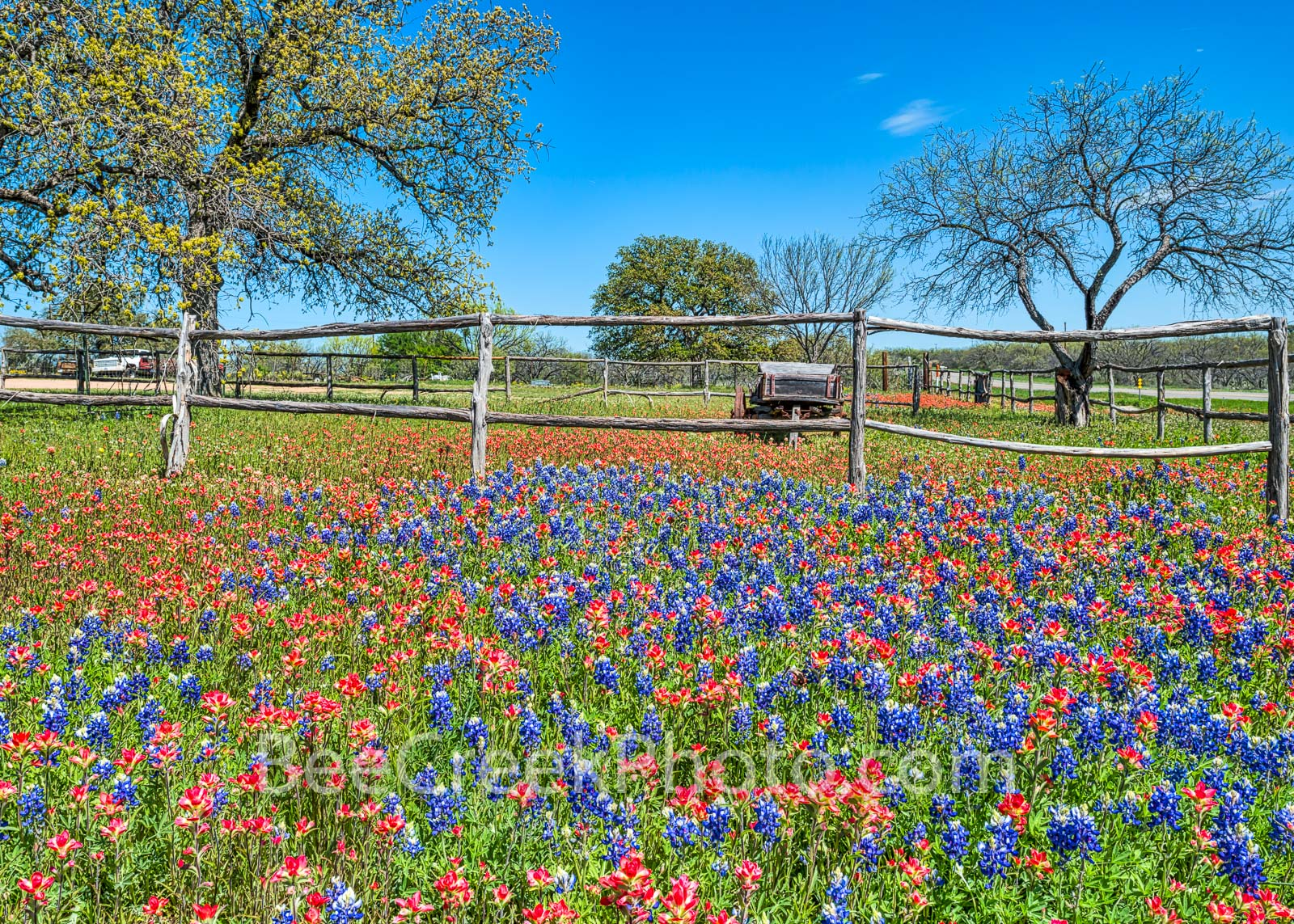 Old wagon, bluebonnet, bluebonnet landscape, indian paintbrush, wildflower, wildflowers, roadside. Hill country, Texas, images of texas, spring flowers, springtime, spring, landscape,