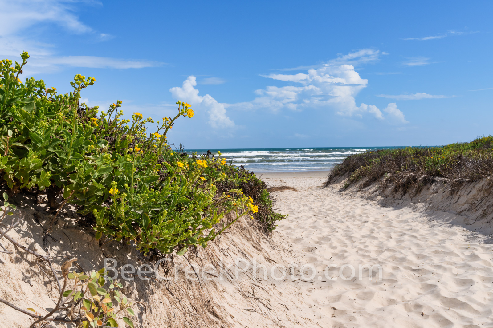 Path Through the Dunes Texas Coast - The Padre Island National Seashore is the longest stretch of undeveloped beach of a barrier...