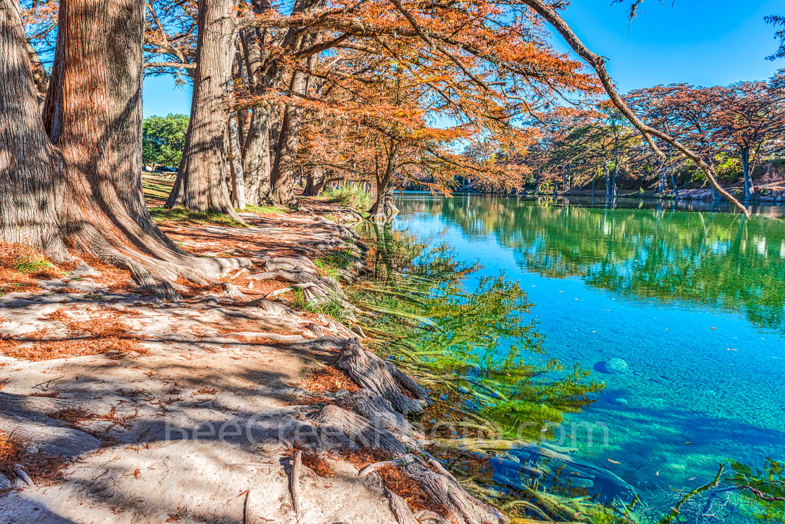 America, American, Frio River, Garner State Park, blue green waters, blue water, clear water, colorful, fall, fall cypress trees, images of Texas, landscape, landscapes, photos of Texas, , photo