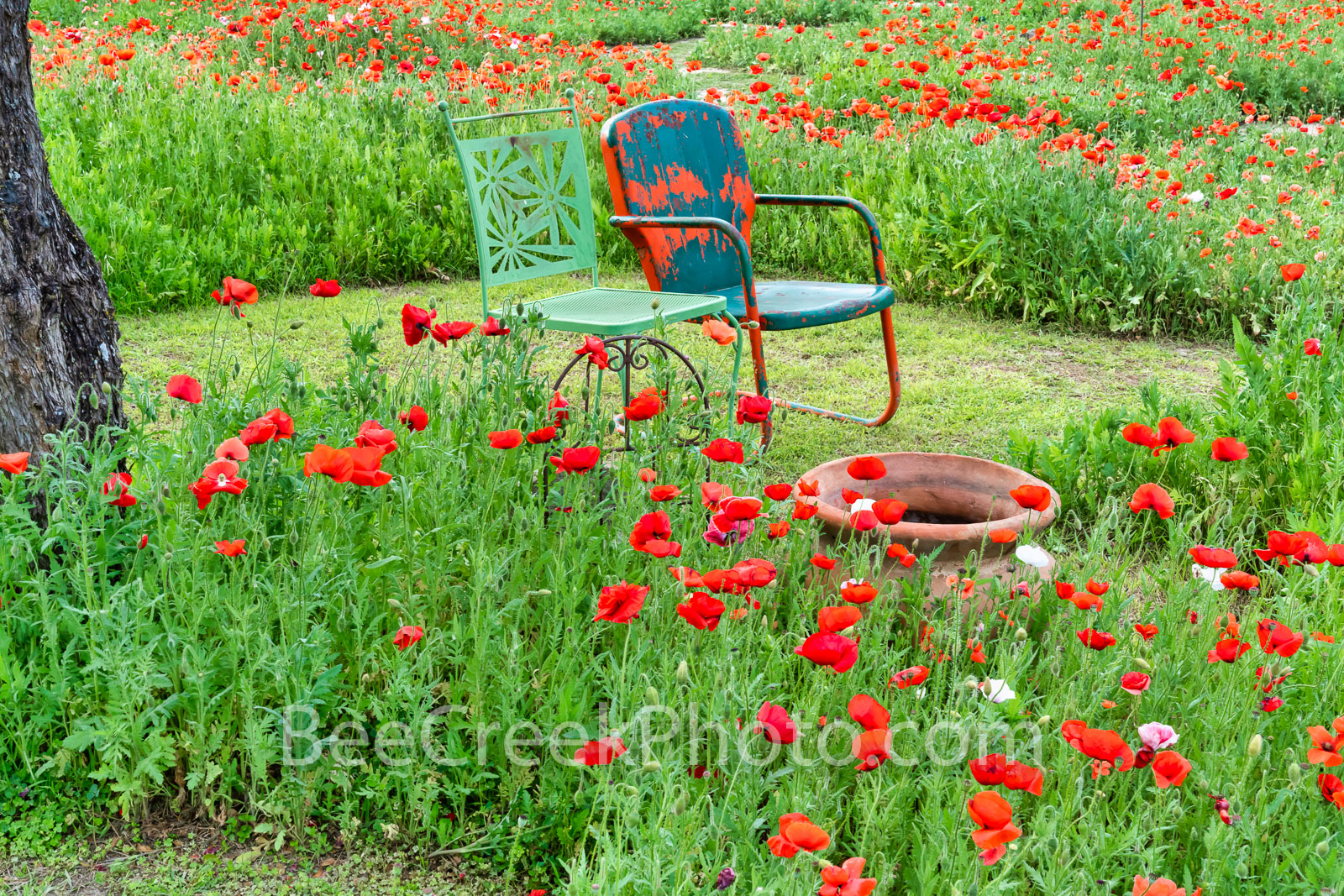 Relaxing in the Poppies - We like the way this person created a nice sitting spot to enjoy the poppies in his garden.  He created...