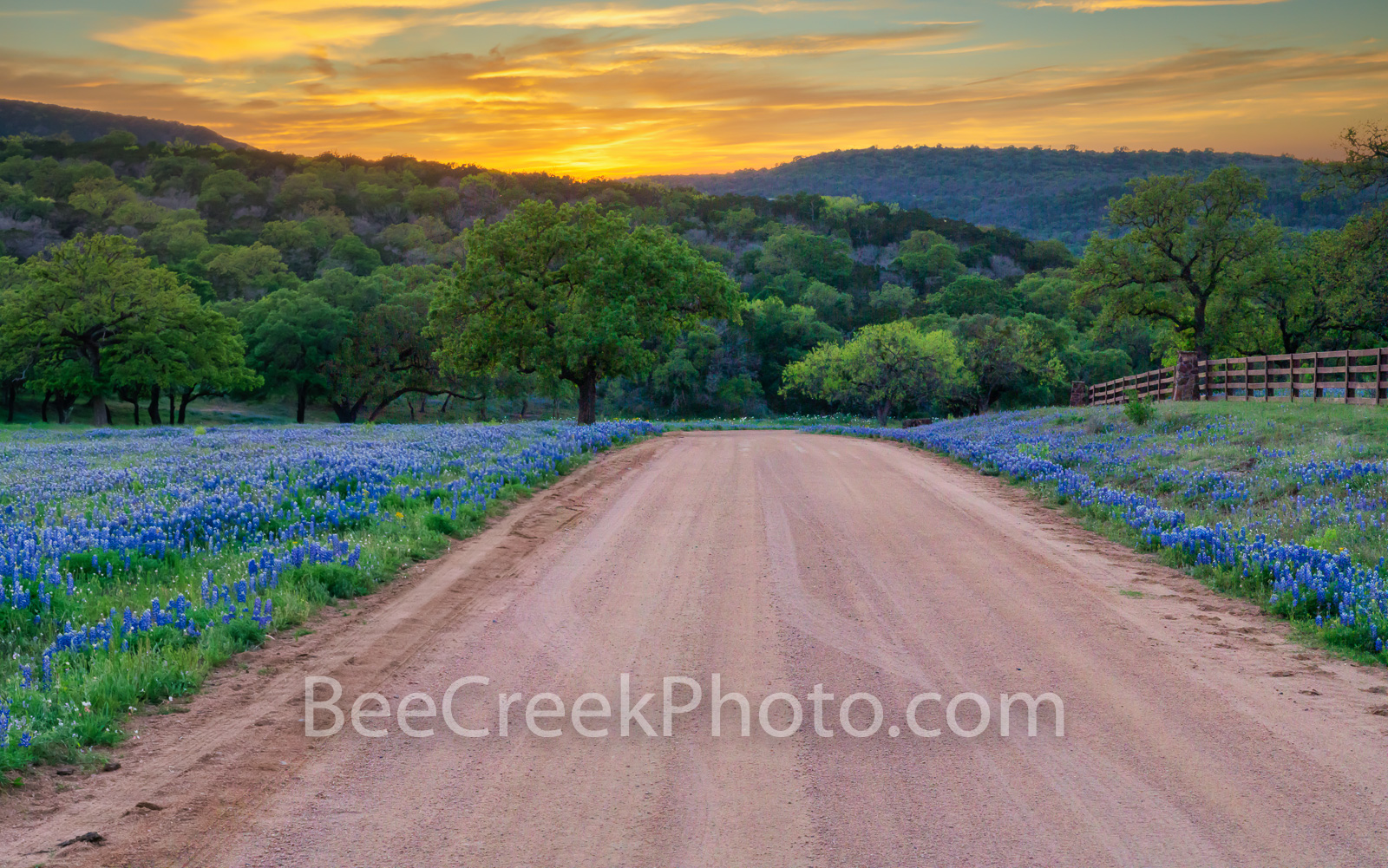 bluebonnets, texas hill country, sunset, dirt road, texas, scenery, texas landscape, hill country, texas bluebonnet, hill country landscape, spring, bluebonnet road, wildflowers, texas wildflowers, im, photo