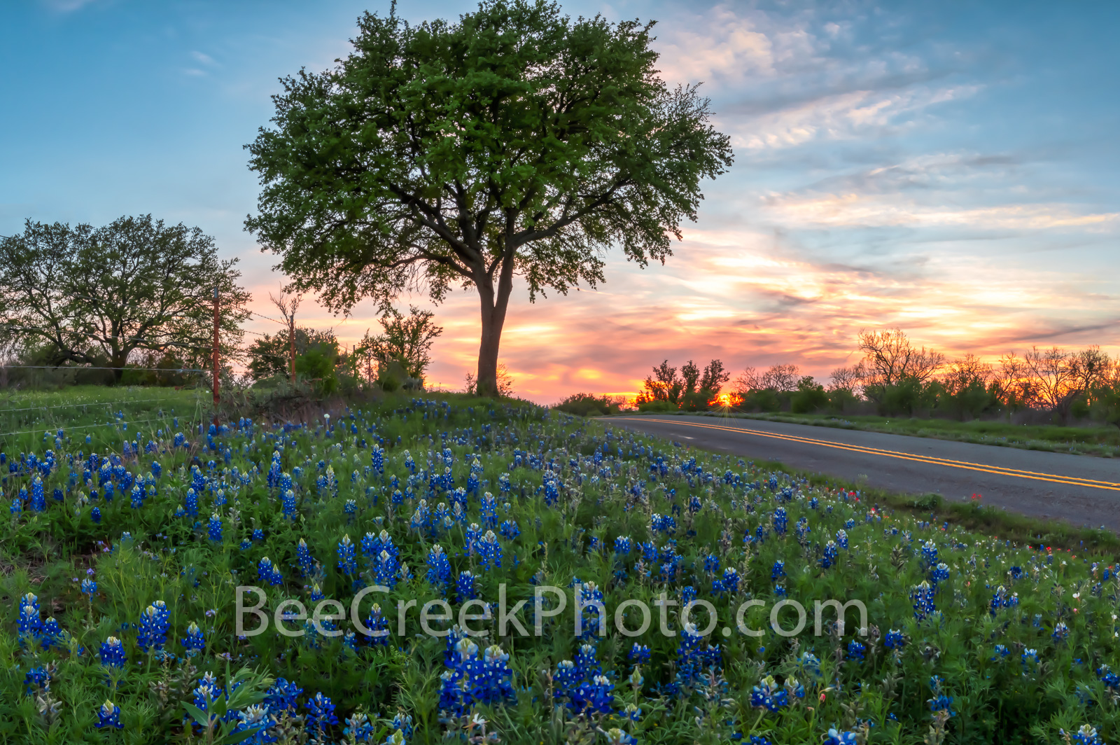 Roadside Bluebonnets at Sunset - Another great sunset with these roadside bluebonnets in the Texas hill country outside of Llano...