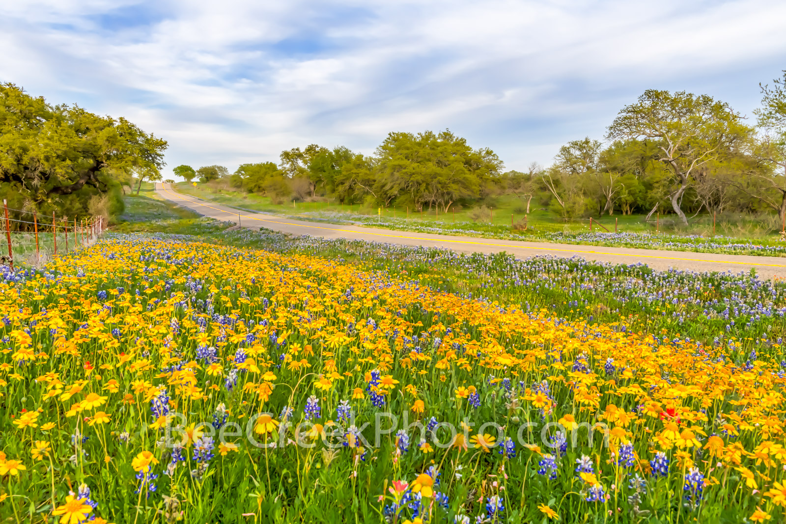 Roadside Wildflower Landscape, texas wldflowers, perky sues, yellow stars, bluebonnets, indian paintbrush, mesquite, road, texas hill country, hill country wildflowers, spring, landscape, texas landsc, photo