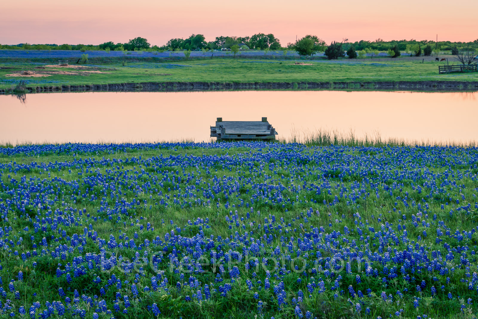Texas bluebonnets, bluebonnet, rural, dusk, pond, tank, water edge, pier, pink, orange, wildflowers, , gulf cost images, Texas beaches, photo