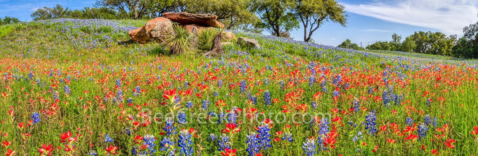 Rural Texas Wildflowers Pano - I capture these wonderful bluebonnets and indian paintbrush in the Texas hill country on a nice...