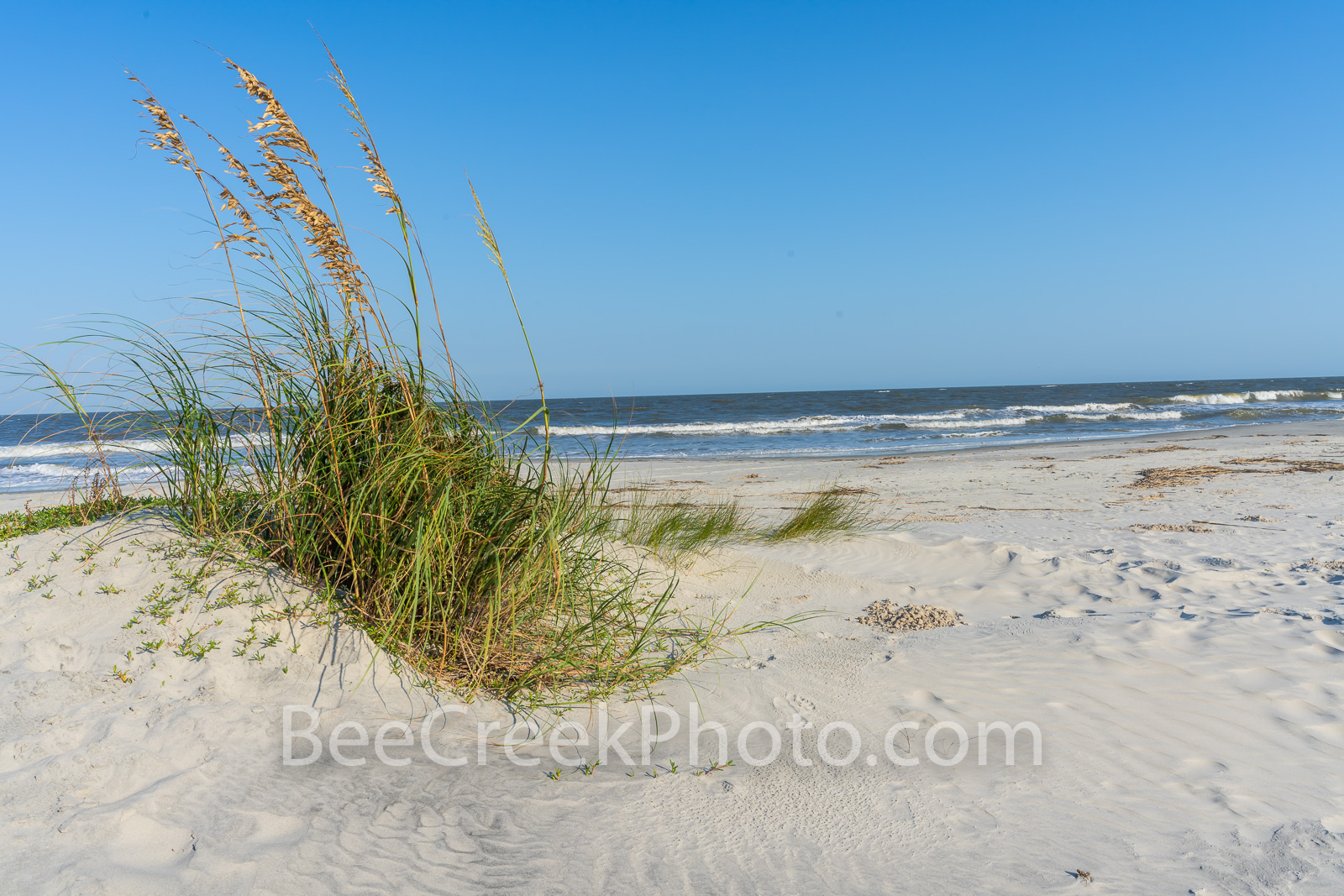 Jekyll island, sea oats, dunes, Alantic Ocean, Georgia, Golden isles, barrier island, beach, blue water, , photo