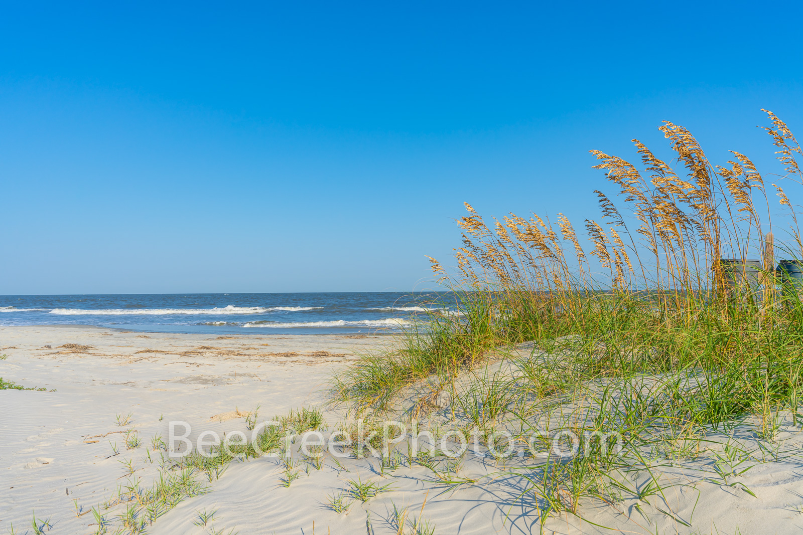 Sea Oats on the Dune - This serene scene of the dunes with the sea oat growing along the beach at Jekyll Island beach with these...