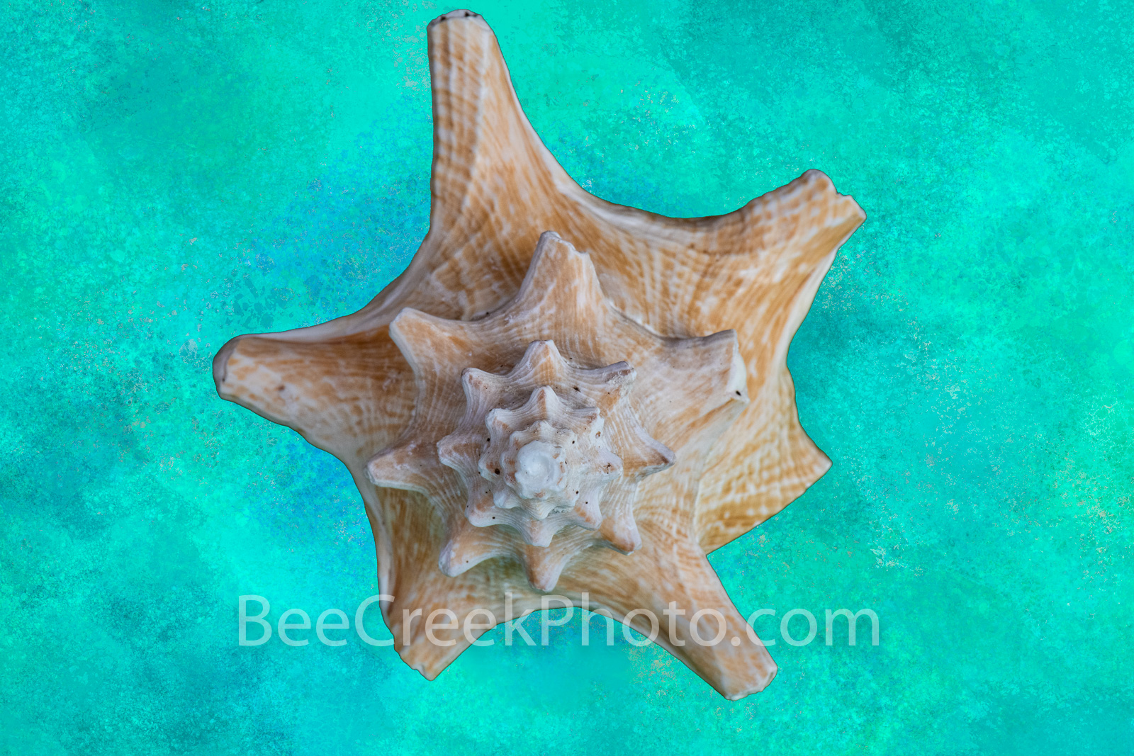 Sea Shell Abstract - This colorful seashell abstract photopainting is a natures beautiful design with a beautiful colors of blue...