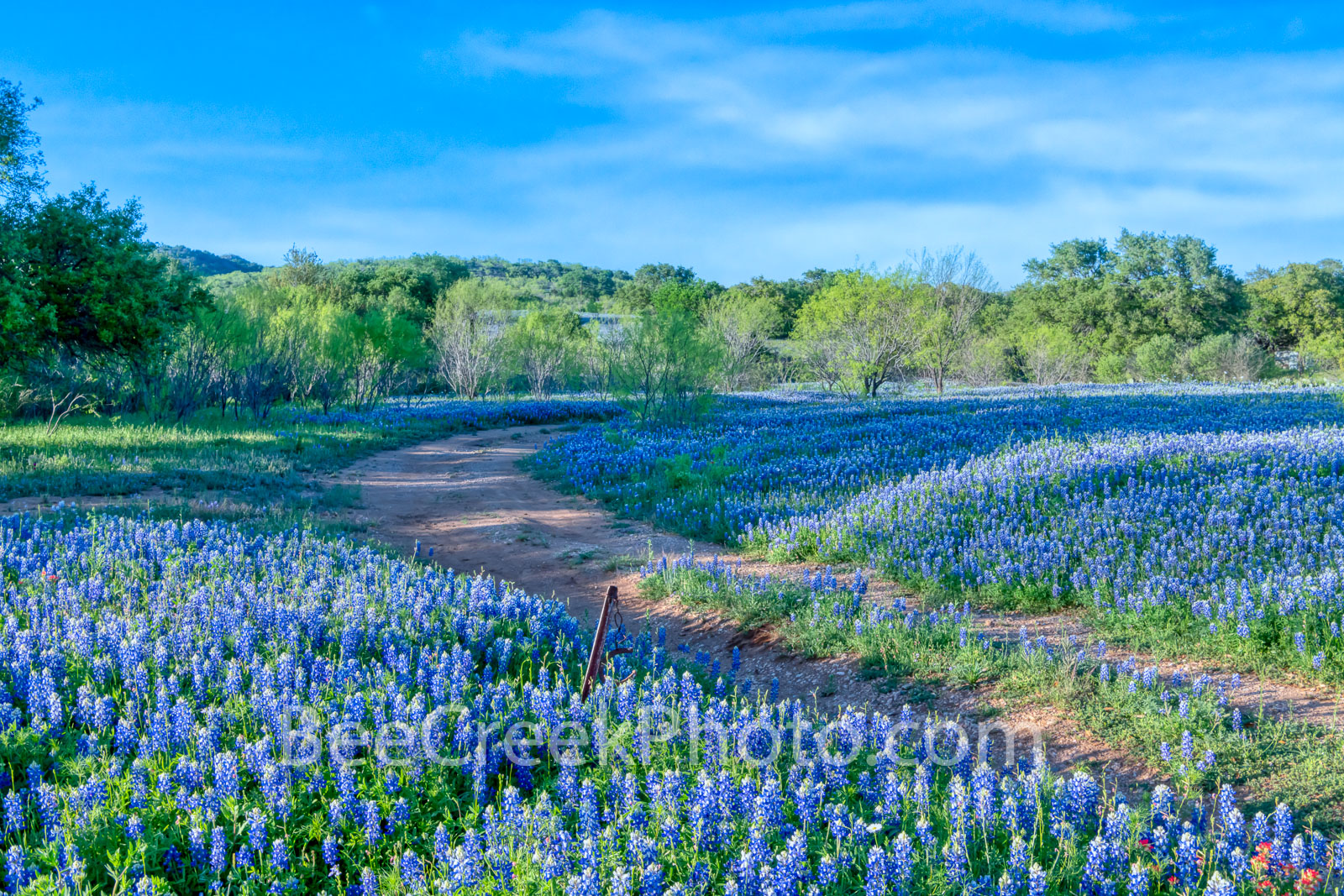 Shadows Across Bluebonnets 2 - We came across this bluebonnet field in the Texas Hill Country and like the way the low angle...