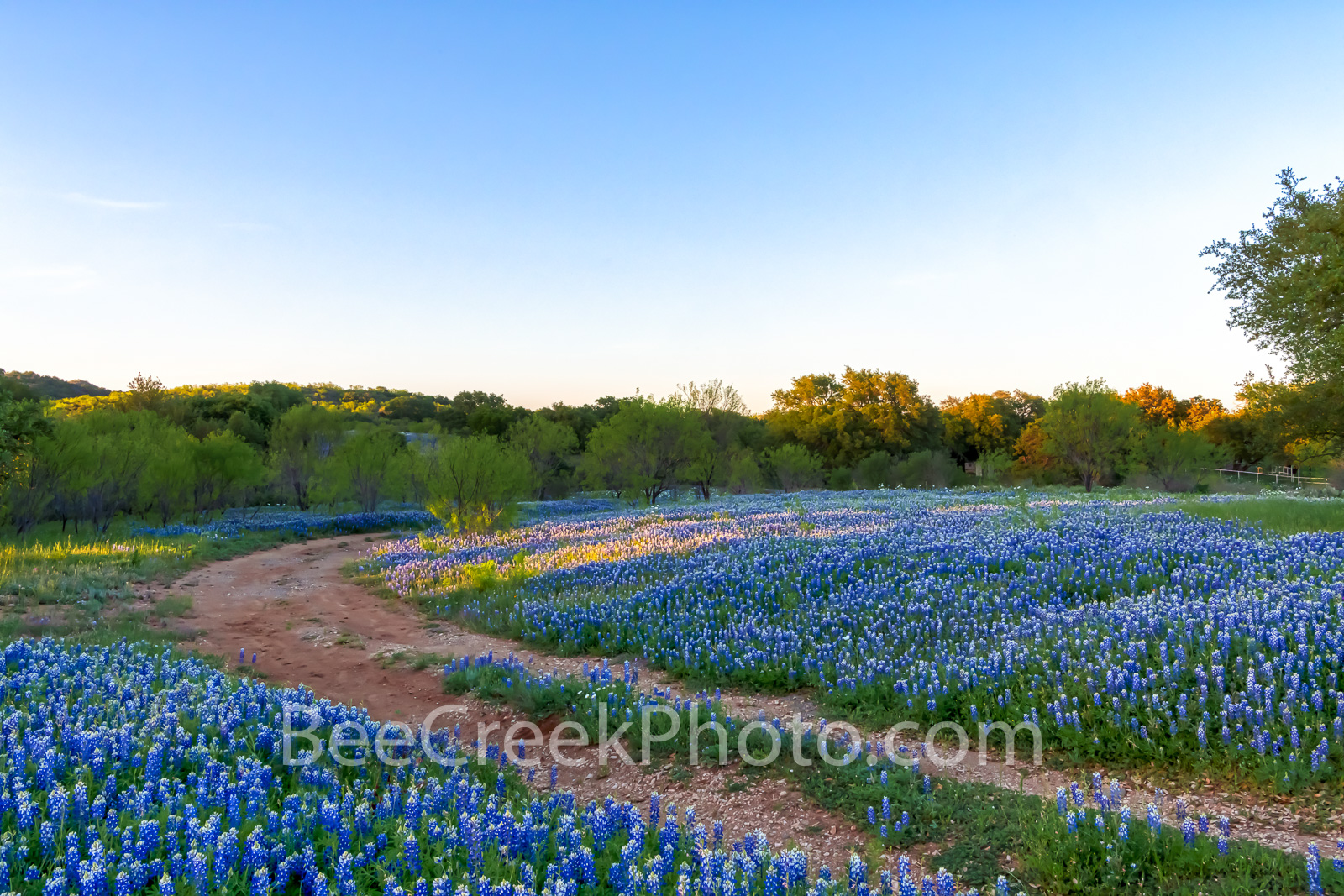 bluebonnets, indian paintbrush, wildflowers, texas hill country, texas, blue bonnets,hill country, shadows, light, road, mesquite, green, blue, llano, sun, shadows, light, trees, curved road, images o, photo