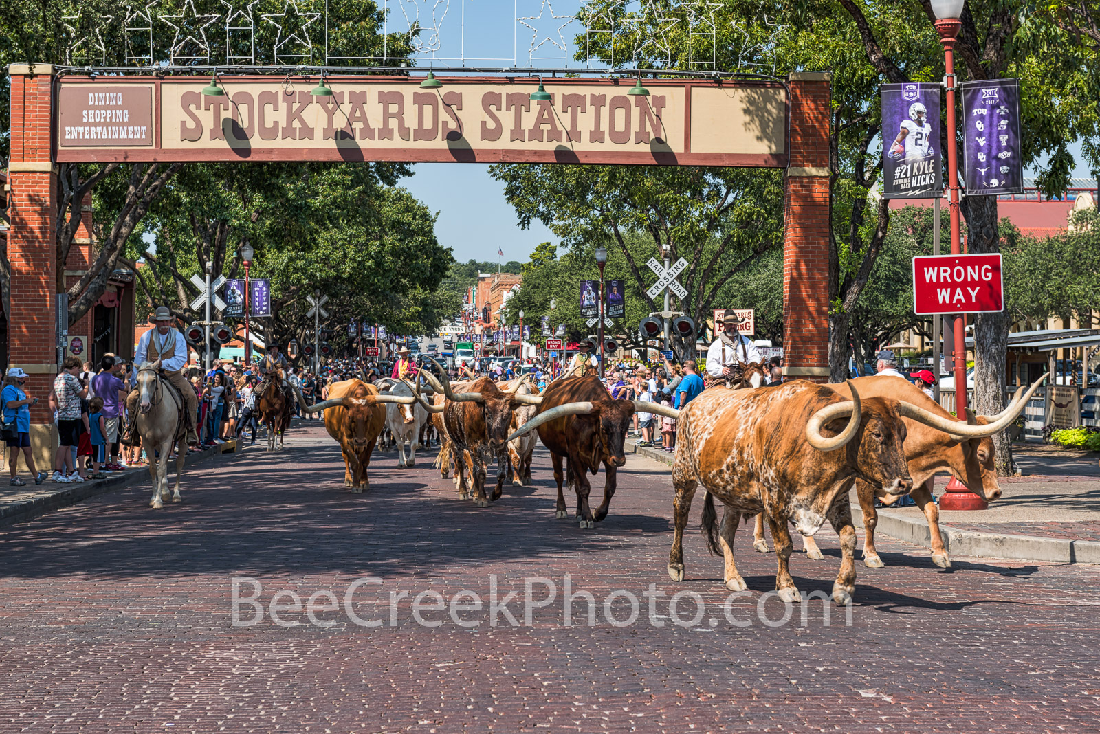 Stockyard Cattle Drive  - The Fort Worth Stockyard cattle drive as cowboy used to do at the turn of the 19th century. Today it...