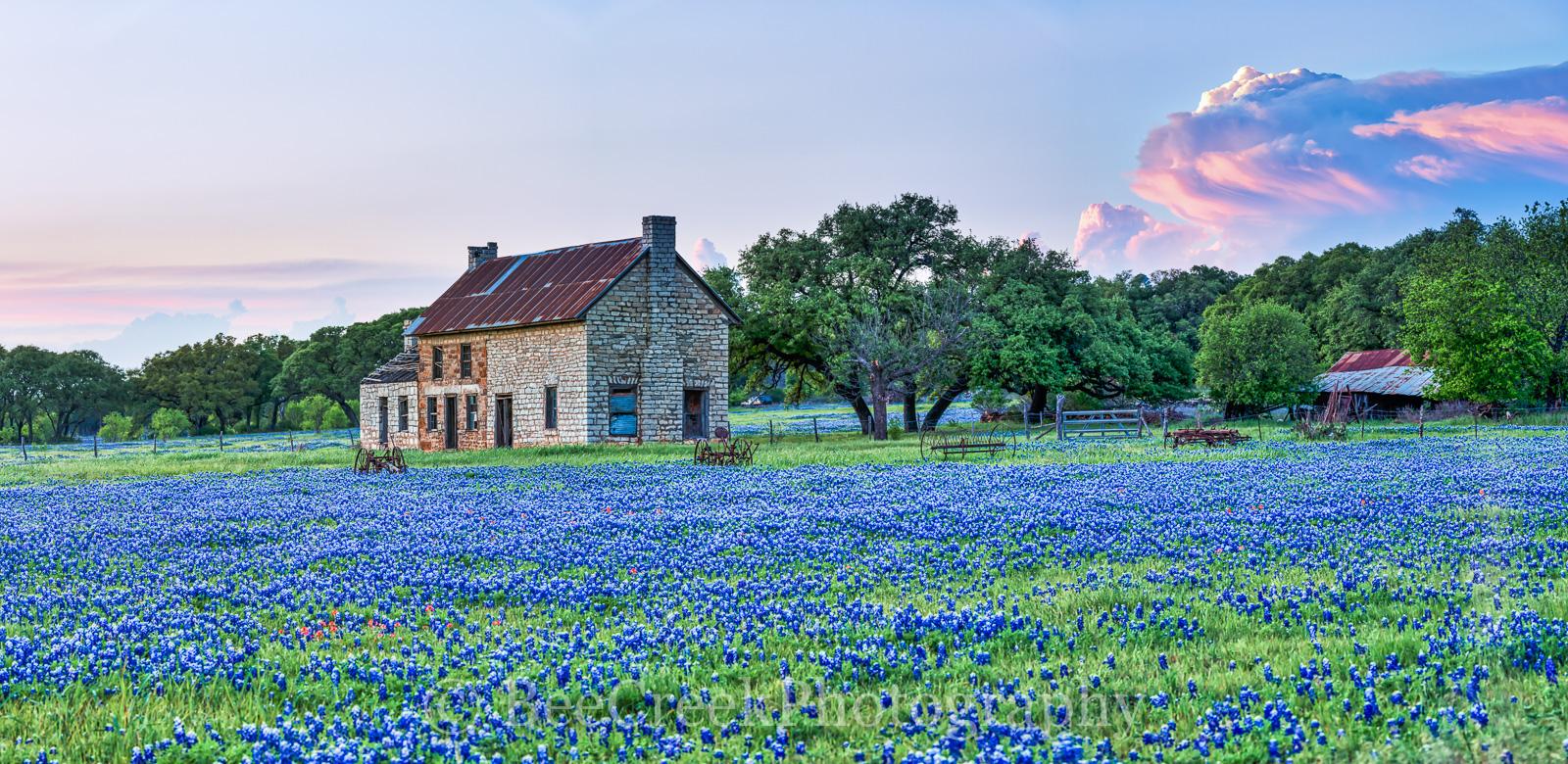 Bluebonnet, bluebonnets, blue bonnets, bluebonnet house, Marble Falls,  farm house, storm cloud, sunset, stone farm house, farm equipment, landscape, indian paint brush, red, wildflowers,, photo