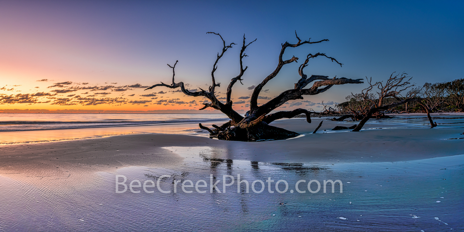 Sunrise at Driftwood Beach Pano 2 - Jekyll Island driftwood beach with trees in the sand at sunrise as a 2 to 1 panorama.  It...