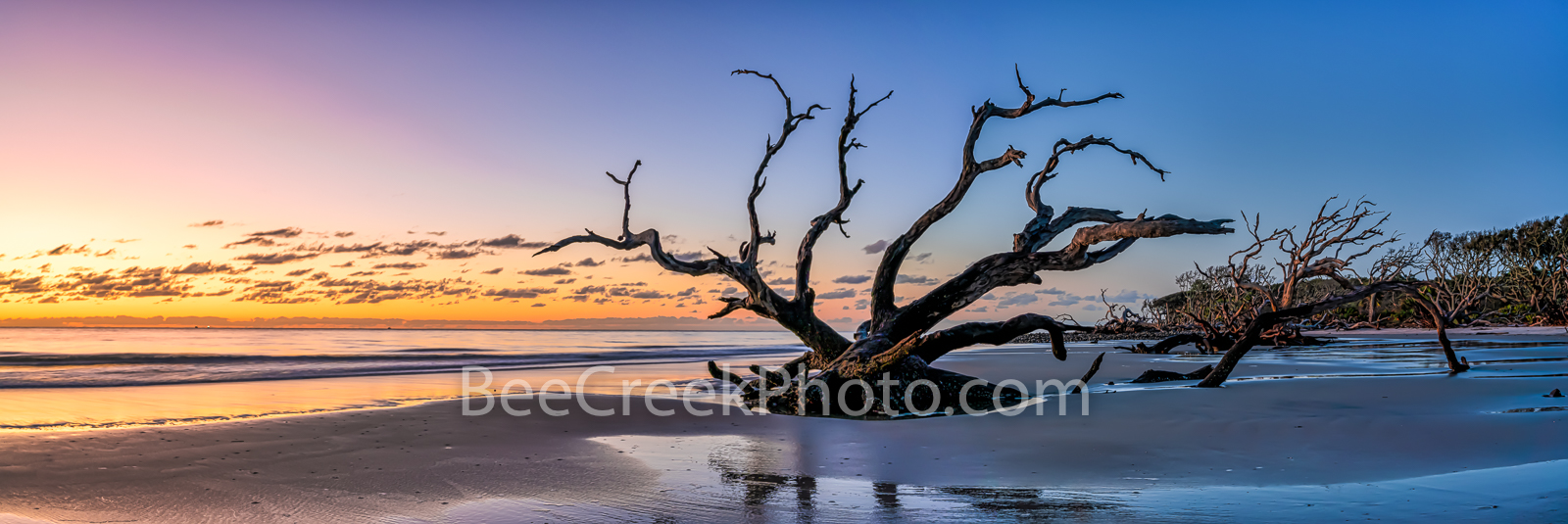 Sunrise at Driftwood Beach Pano - Jekyll Island driftwood beach with trees in the sand at sunrise as a 3 to 1 panorama. It was...