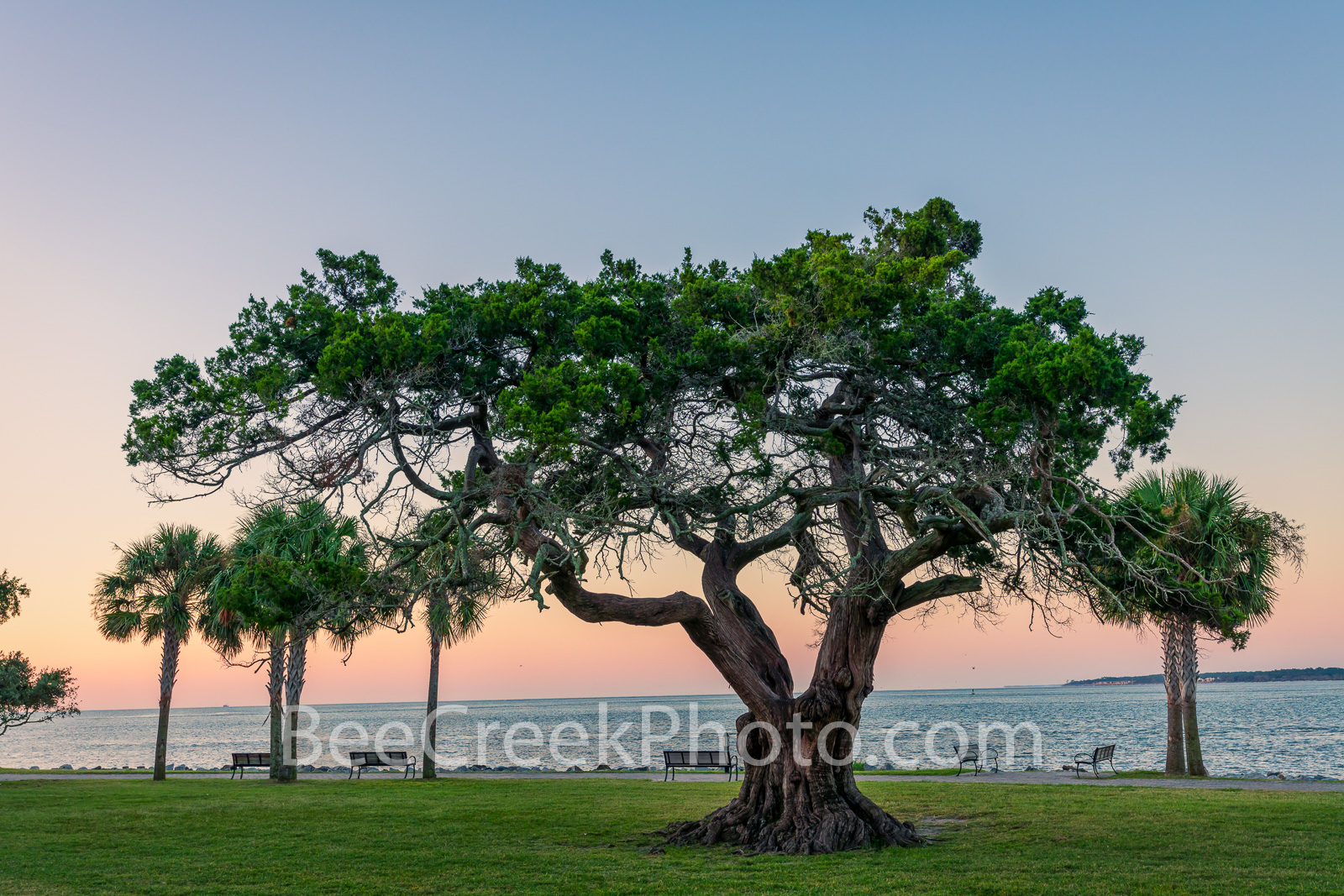 Sunrise Neptune Park Tree - Neptune Park Tree sunrise is the a park that runs along the ocean on St. Simon Island in George....