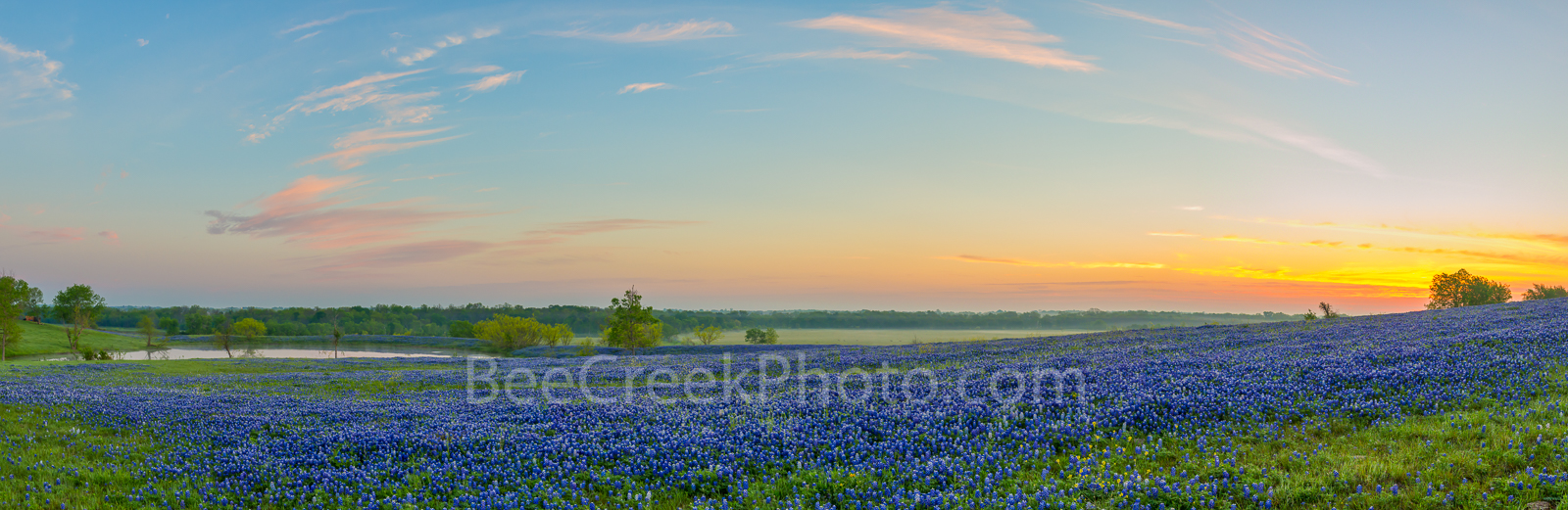 Bluebonnets, bluebonnet, blue bonnets, sunrise, ranch, texas, pano, panorama, field of bluebonnets, watering, tank, clouds, colors, Ennis, morning,, photo