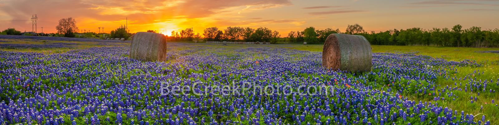 Sunset Bluebonnets and Haybales Pano  - Texas Bluebonnets Images - We were lucky to capture this wonderful sunset over this field...