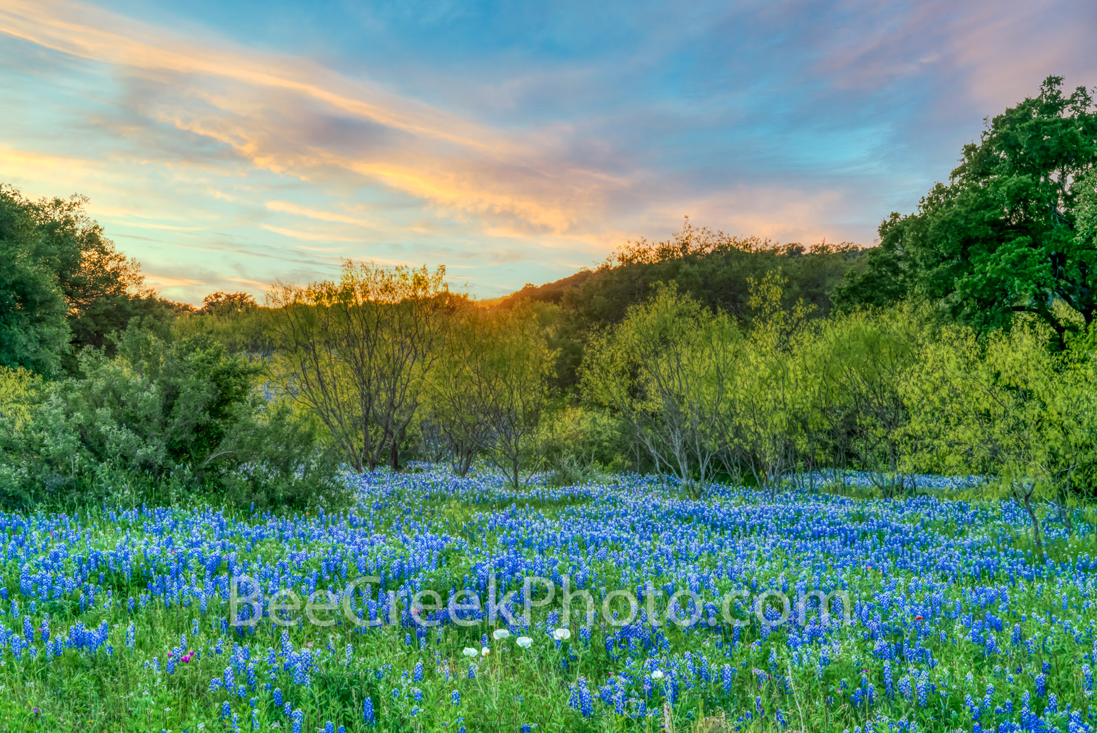 texas bluebonnets, texas wildflowers, texas hill country, hill country, poppies, texas landscape, pictures of bluebonnets, landscape, texas, dusk, pictures of bluebonnets, images of bluebonnets, wildf, photo
