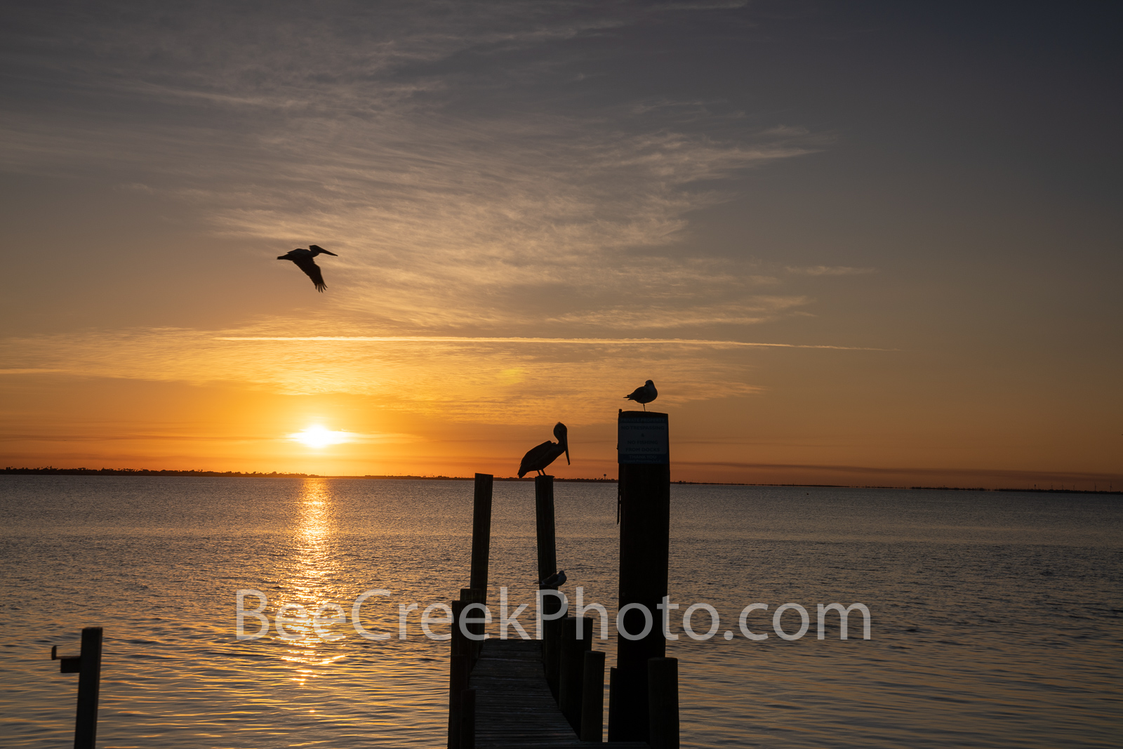 Sunset Over Laguna Madre 12 - Two birds enjoy the island sunset over laquna madre on South Padre island. We capture these silouette...