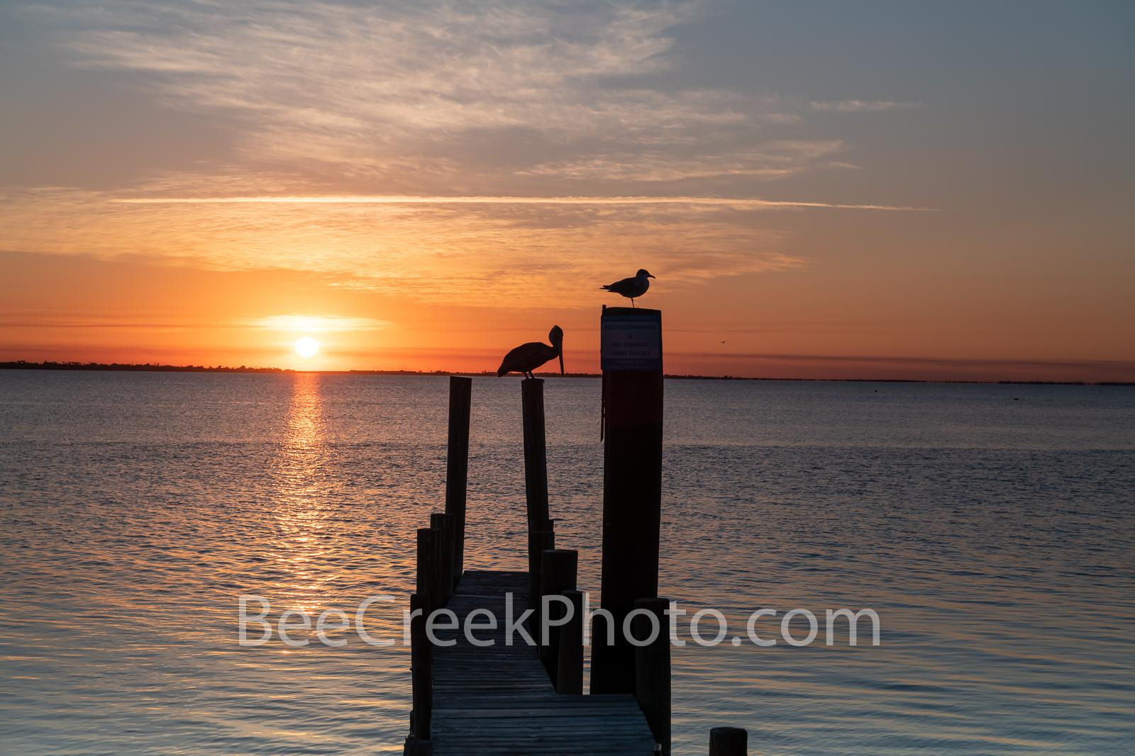 Island Sunset, birds, island, sunset, laquna madre, south padre island, seascape, coast, silouette, pelican, seagull, dock, roosting, scenic, seascape, coastal,, photo