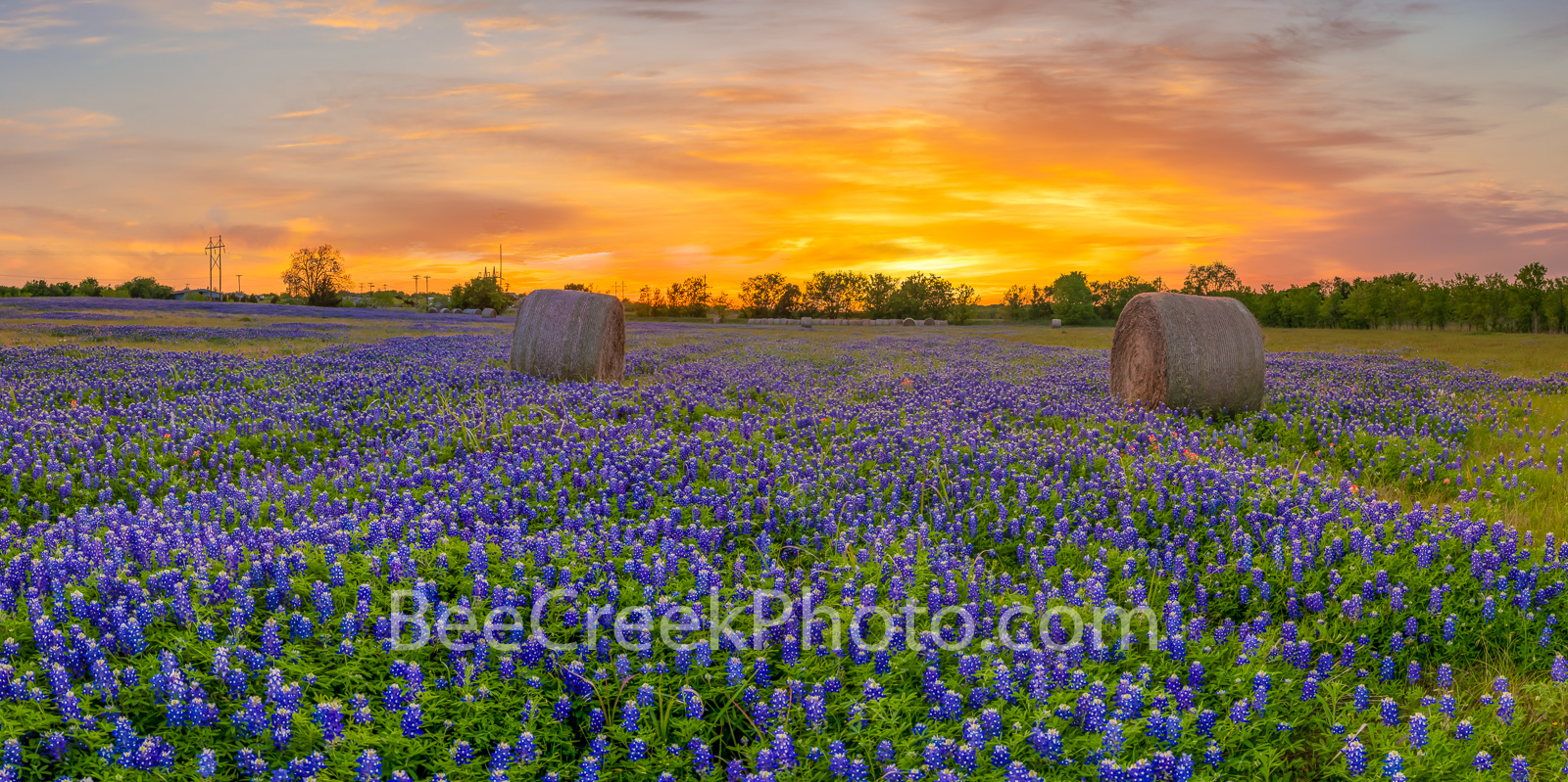 Texas Bluebonnets, bluebonnets, tx bluebonnets, sunset, hay bales, sunrays, texas wildflowers, indian paintbrush, Sunset Over images of texas, field of bluebonnets, texas farm,, photo
