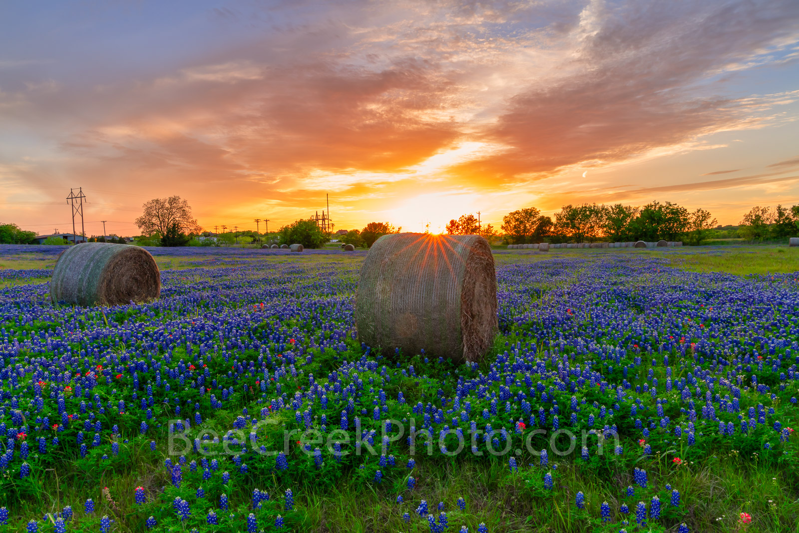 Texas bluebonnet, sunset, hay bales, sunset colored sky, sun rays, rural, wildflowers,, photo