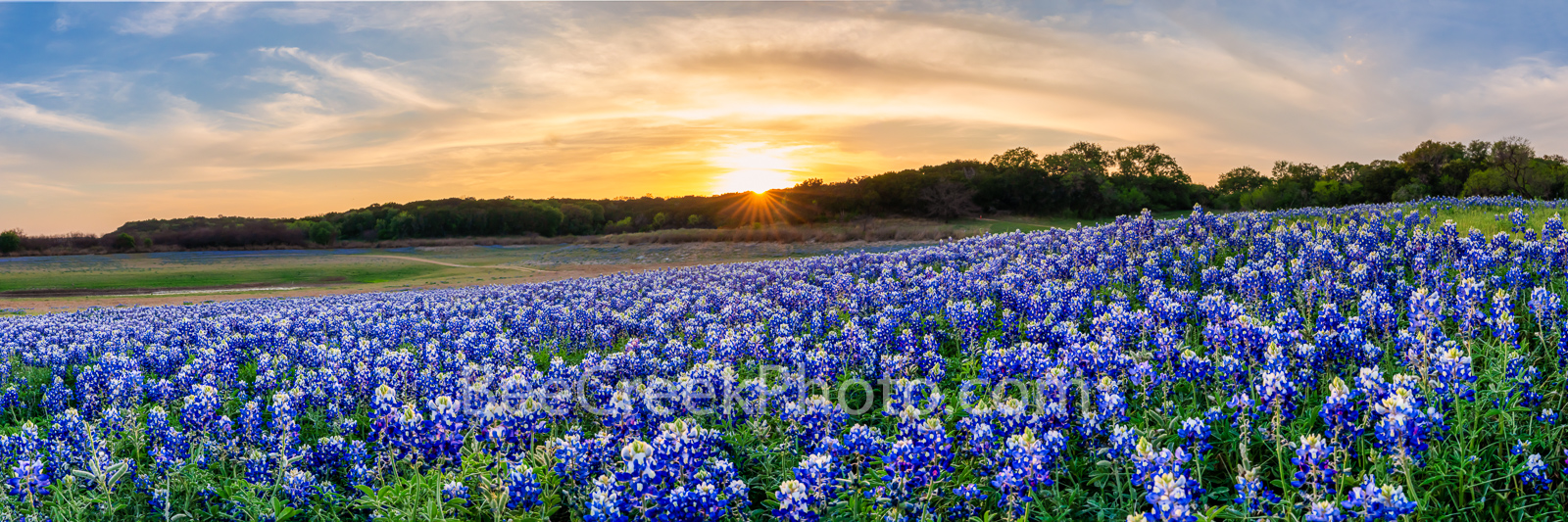 Sunset Over the Bluebonnets Pano - The Texas hill country dry river bed came back to life again after the waters went down along...