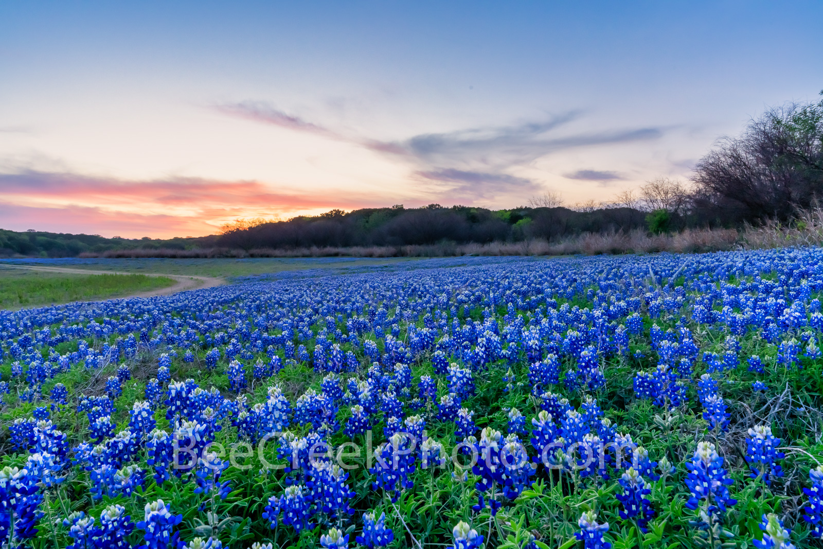 Sunset Over the Park Bluebonnets  - Another capture of the field of bluebonnets after sunset and brought up these nice colors...