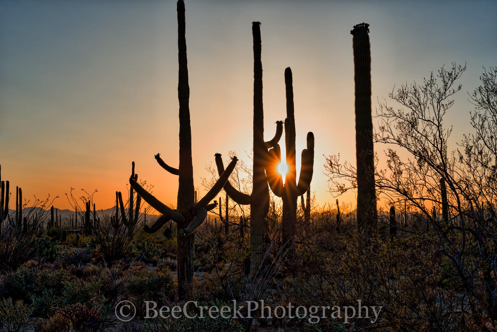 Saguaro, sunset, sunsets, sun set, Arizona, Tucson, plant, cactus, cacti, desert southwest, landscape, landscapes, desert, desert southwest, , photo