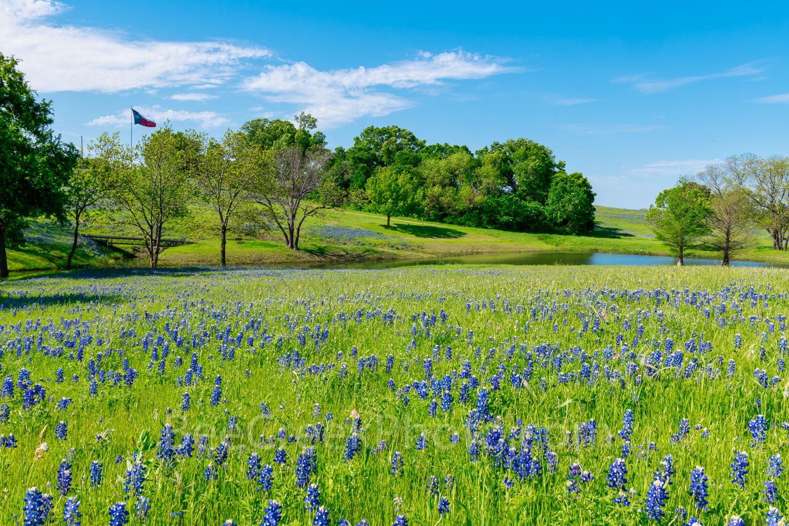 Ennis, Texas bluebonnet landscape, bluebonnets, landscape, texas, wildflowers, wildflower, blue sky, creek, Texas flag,, photo