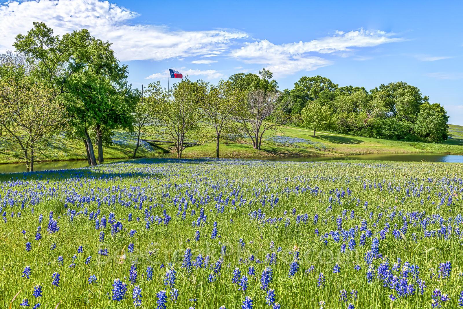 Ennis, Texas bluebonnet landscape, bluebonnets, landscape, texas, wildflowers, blue sky, creek, Texas flag, images of bluebonnets, texas, texas wildflowers, , photo