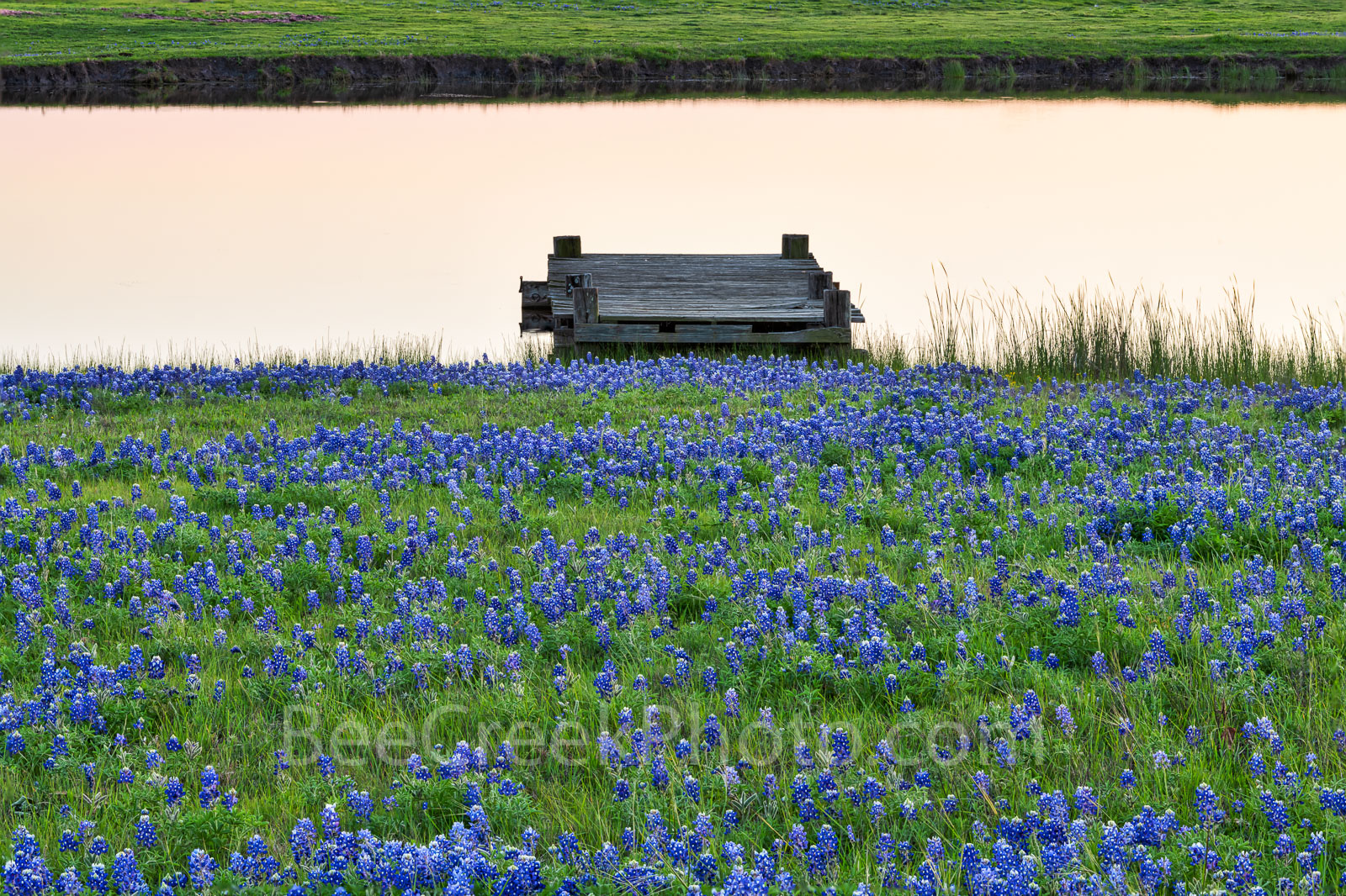 Texas bluebonnets, pond, water edge, pond, rancher, farm, rural texas, pier, ranch, dusk, wildflowers, bluebonnets, , gulf cost images, Texas beaches, photo