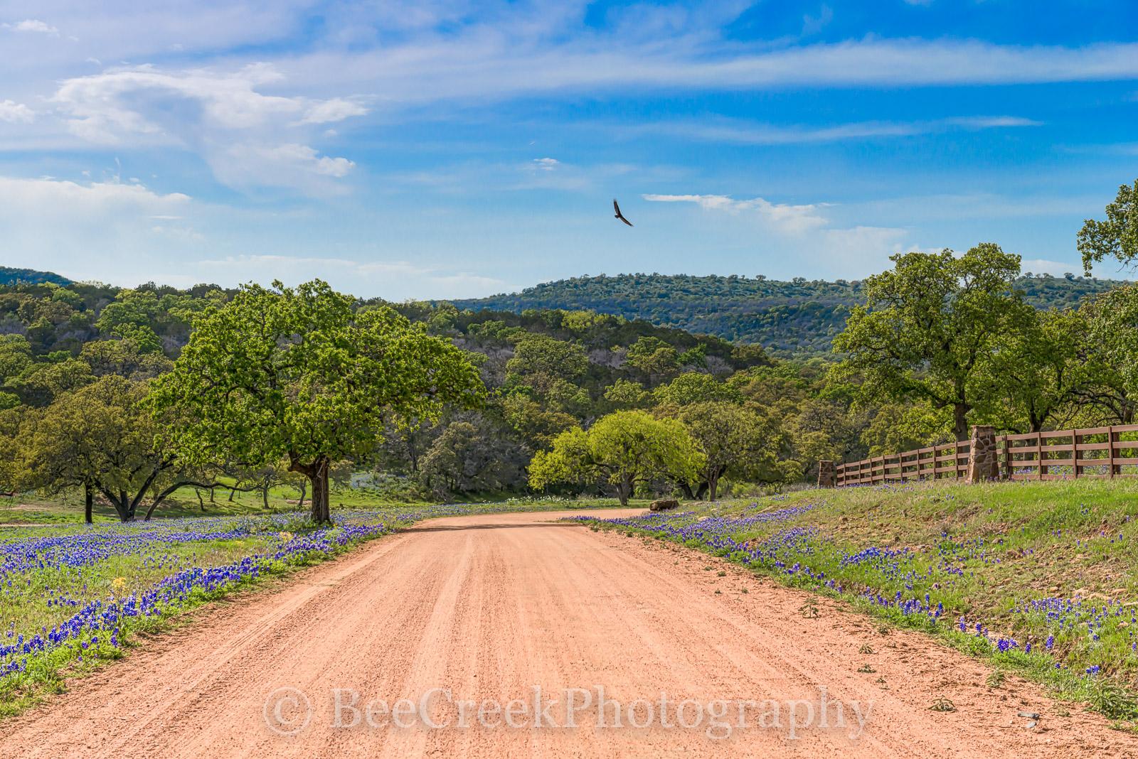 bluebonnets, Texas Hill Country, blue bonnets, dirt road, hills, fence, trees, blue sky, Texas flowers, texas wildflowers, landscape, landscapes, bird, texas wildflowers, springtine, spring, spring fl, photo