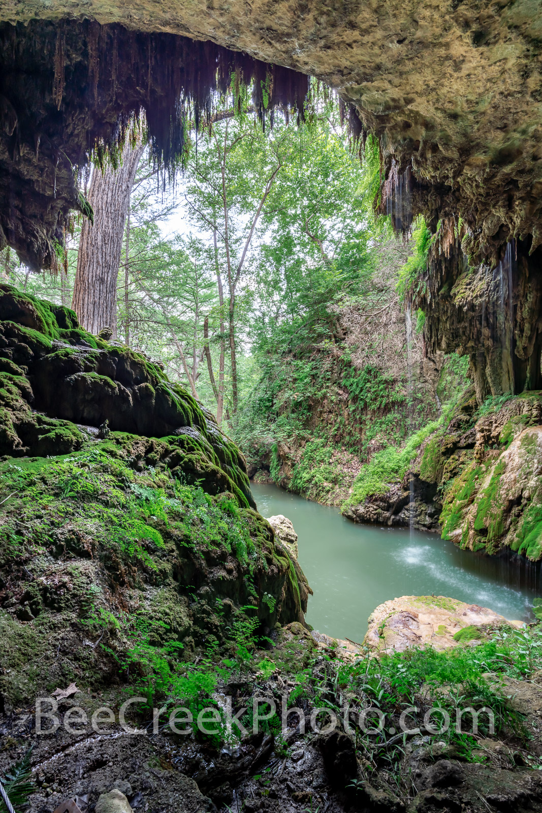 Texas Hill Country Grotto Vertical - From behind the grotto you can see what seems to be a tropical rain forest yet it is located...