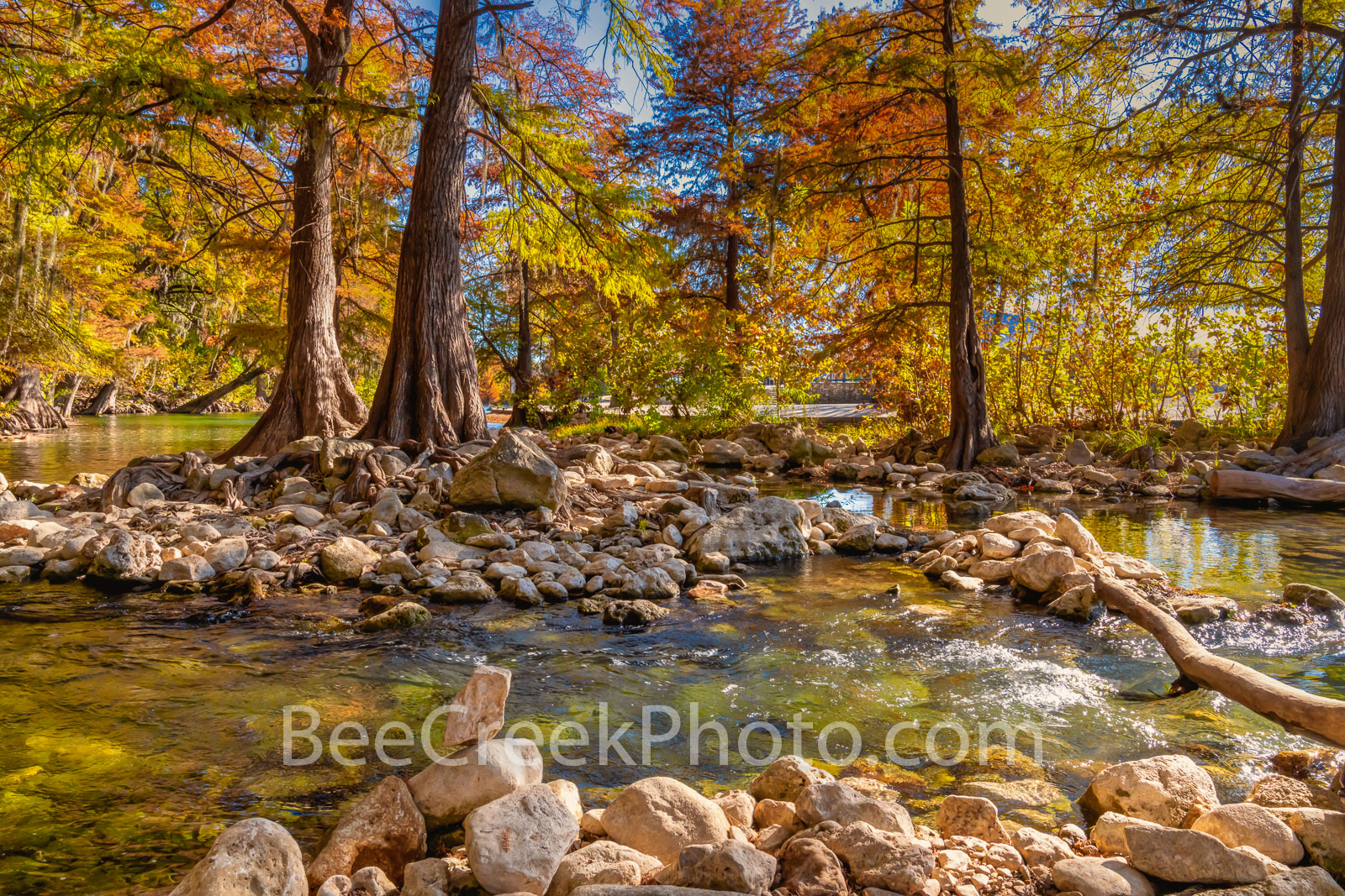 Texas Scenic Fall River View - Fall colors are abundant along the guadalupe river as the trees have turned different shades of...